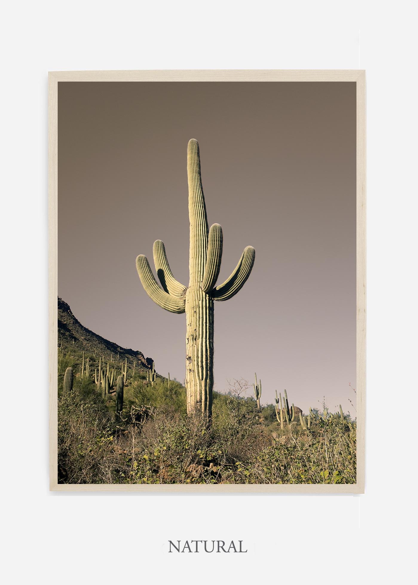 nomat-naturalframe-saguaroNo.20-wildercalifornia-art-wallart-cactusprint-homedecor-prints-arizona-botanical-artwork-interiordesign.jpg