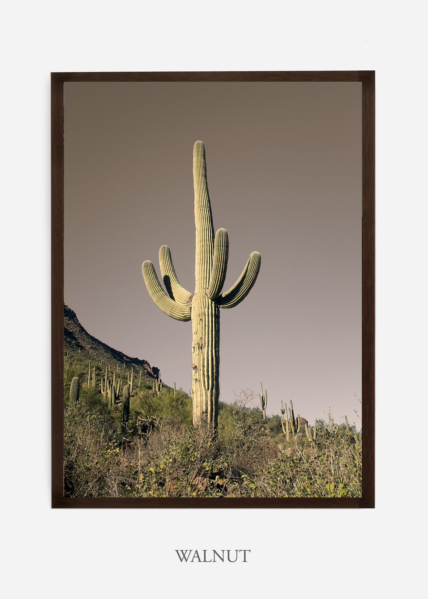 nomat-walnutframe-saguaroNo.20-wildercalifornia-art-wallart-cactusprint-homedecor-prints-arizona-botanical-artwork-interiordesign.jpg