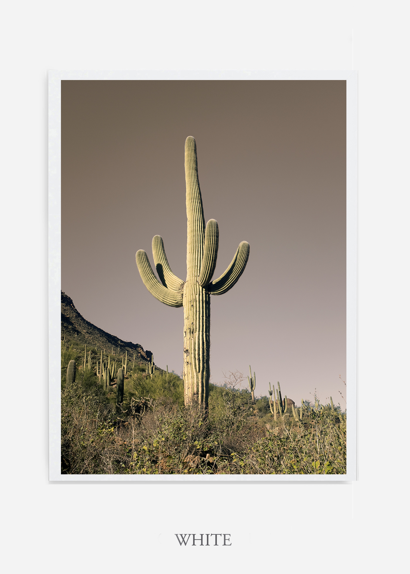 nomat-whiteframe-saguaroNo.20-wildercalifornia-art-wallart-cactusprint-homedecor-prints-arizona-botanical-artwork-interiordesign.jpg