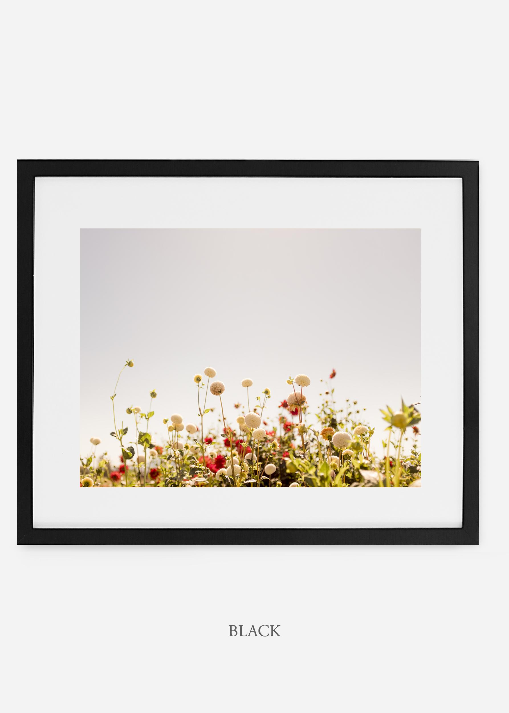 wilder-california-blackframe-dahlia-5-minimal-botanical-print-art-interior-design.jpg