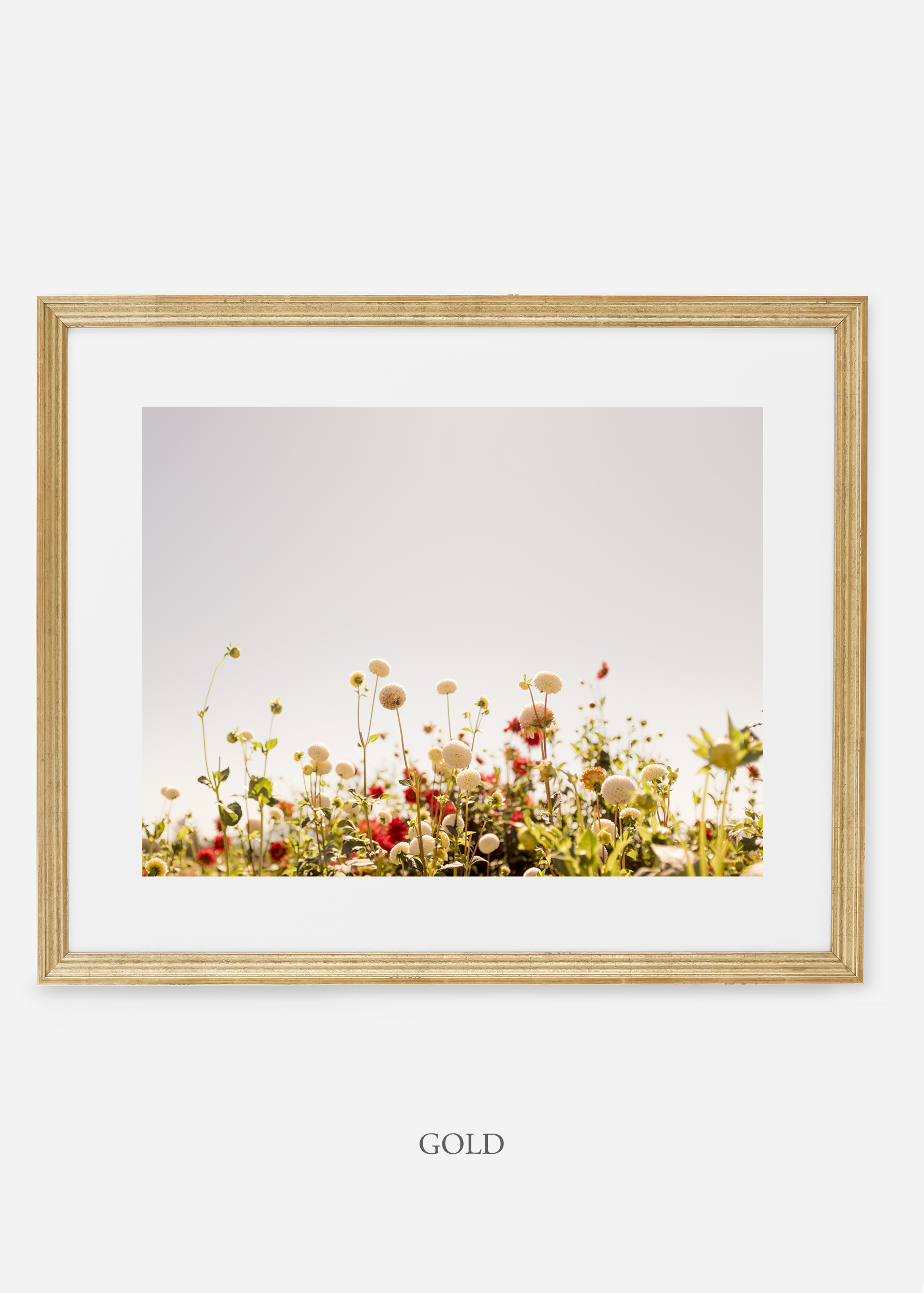 GoldFrame_DahliaNo.5_WilderCalifornia_Art_Floral_Homedecor_Prints_Dahlia_Botanical_Artwork_Interiordesign.jpg
