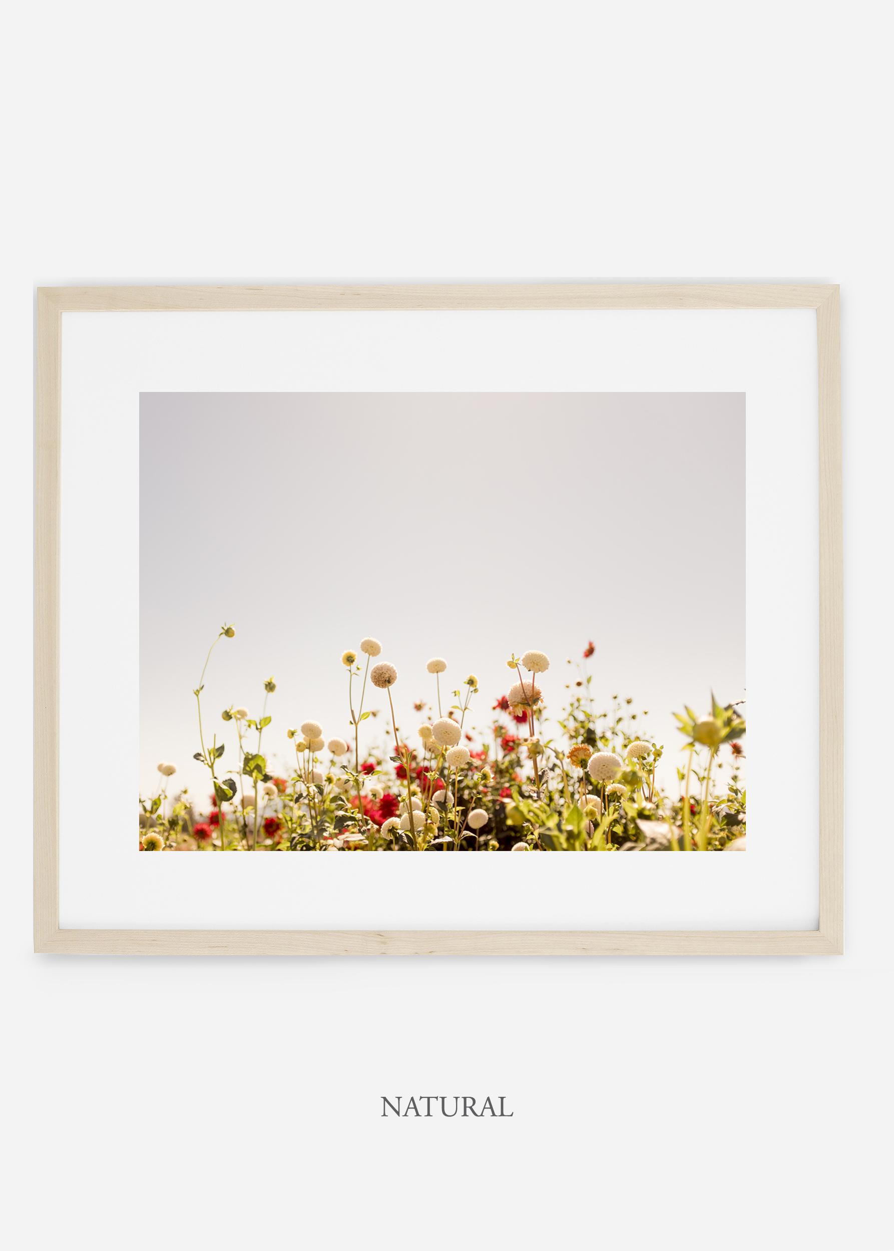 wilder-california-naturalframe-dahlia-5-minimal-botanical-print-art-interior-design.jpg