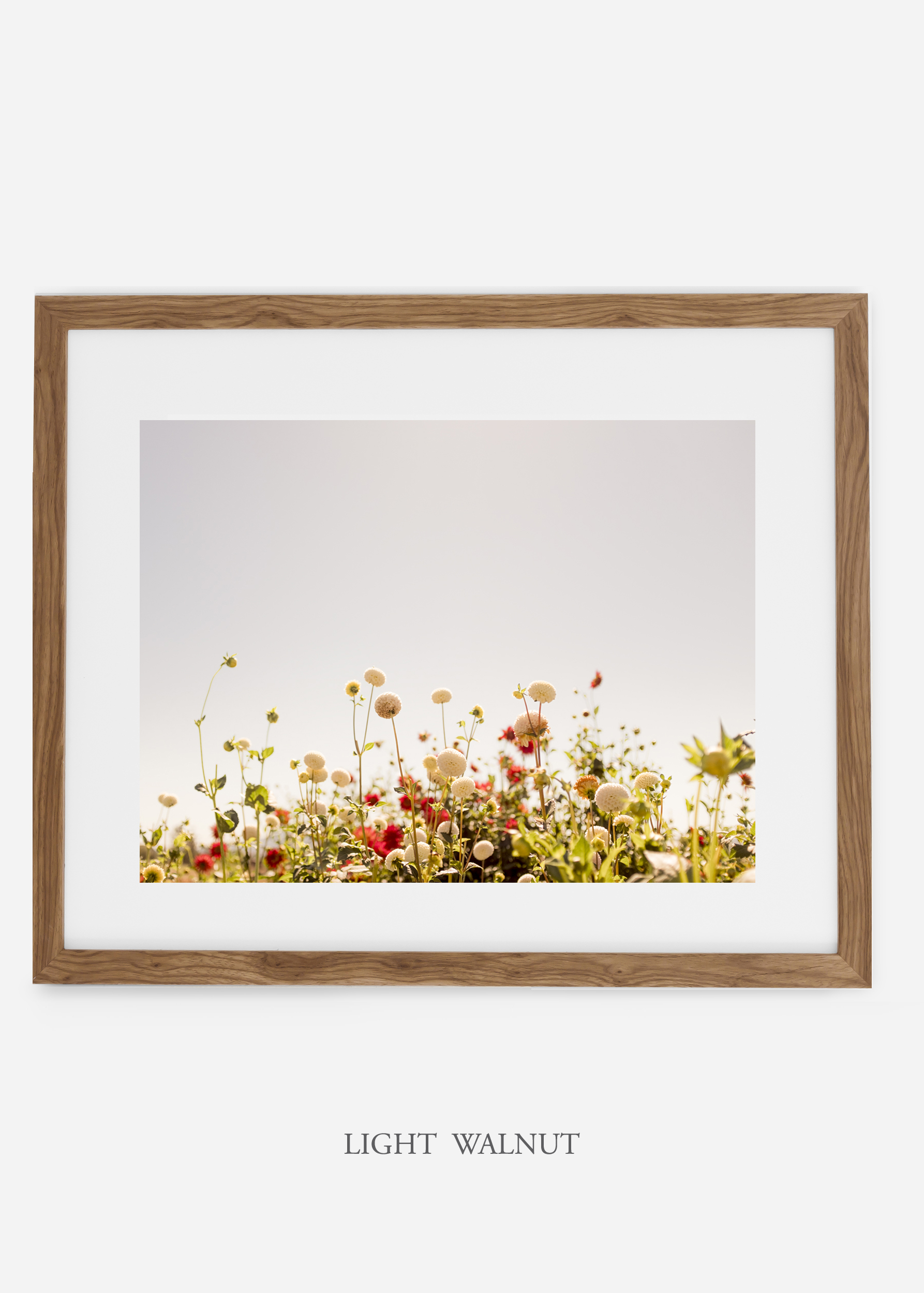 wilder-california-lightwalnutframe-dahlia-5-minimal-botanical-print-art-interior-design.jpg