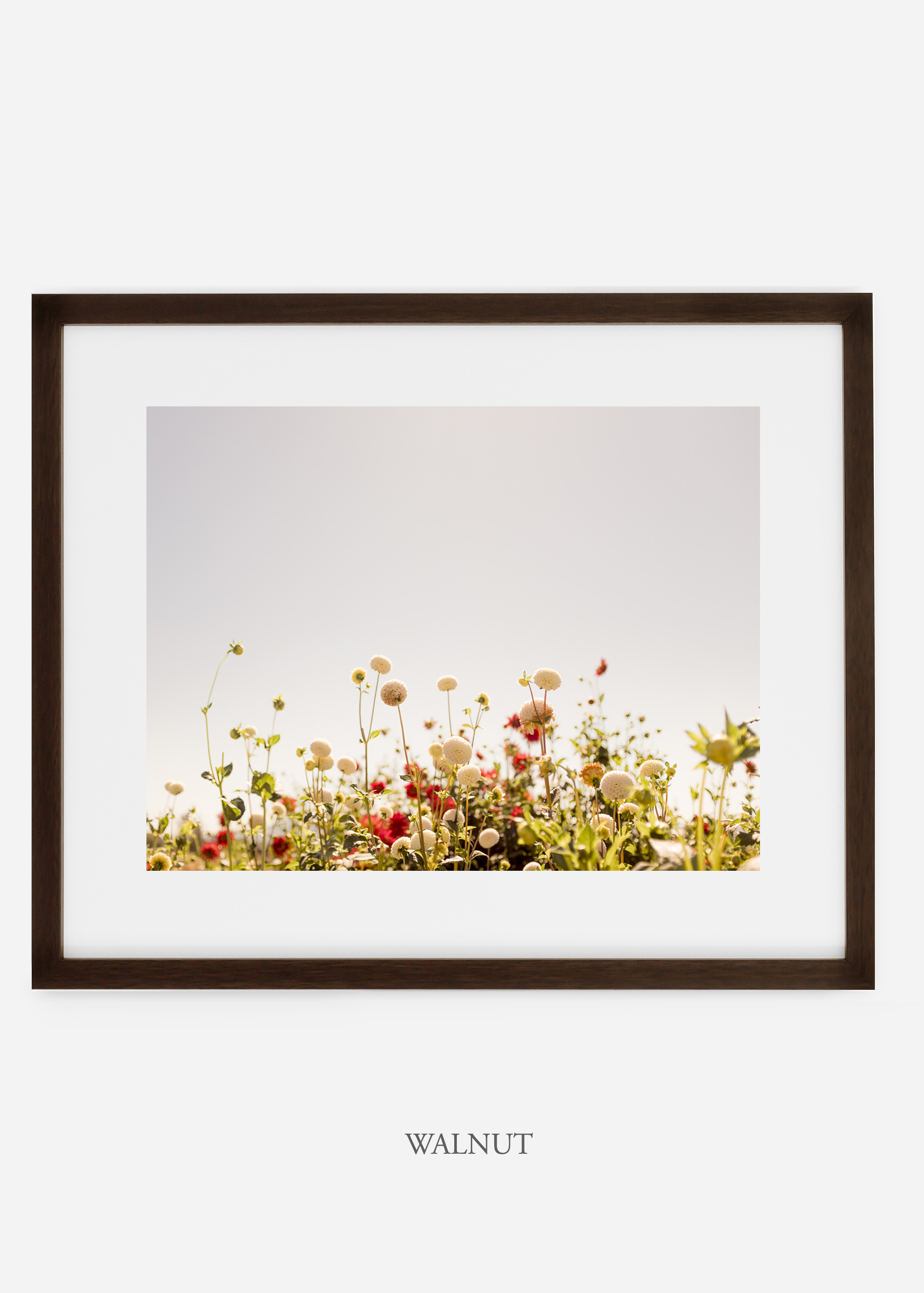 wilder-california-walnutframe-dahlia-5-minimal-botanical-print-art-interior-design.jpg
