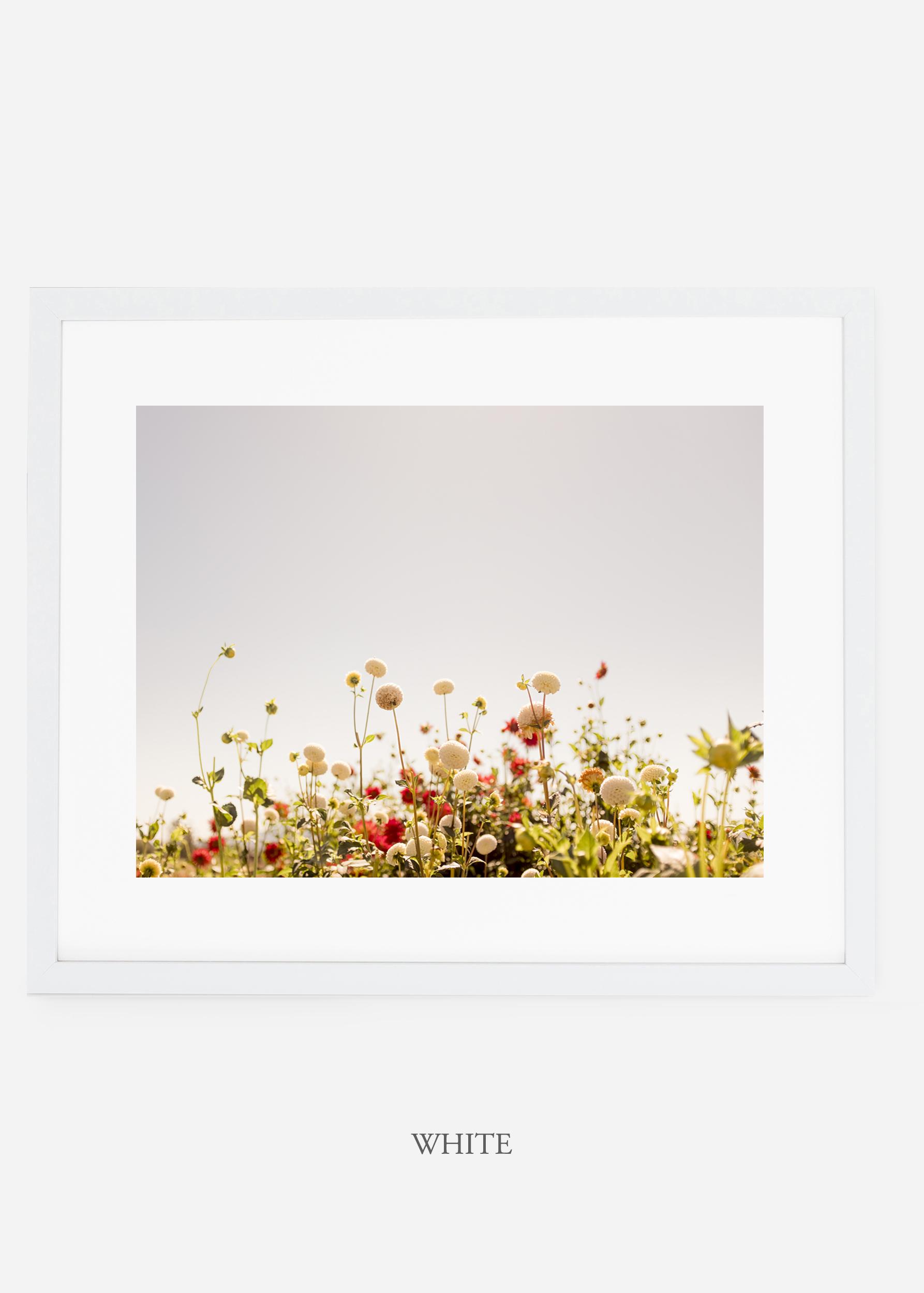 wilder-california-whiteframe-dahlia-5-minimal-botanical-print-art-interior-design.jpg