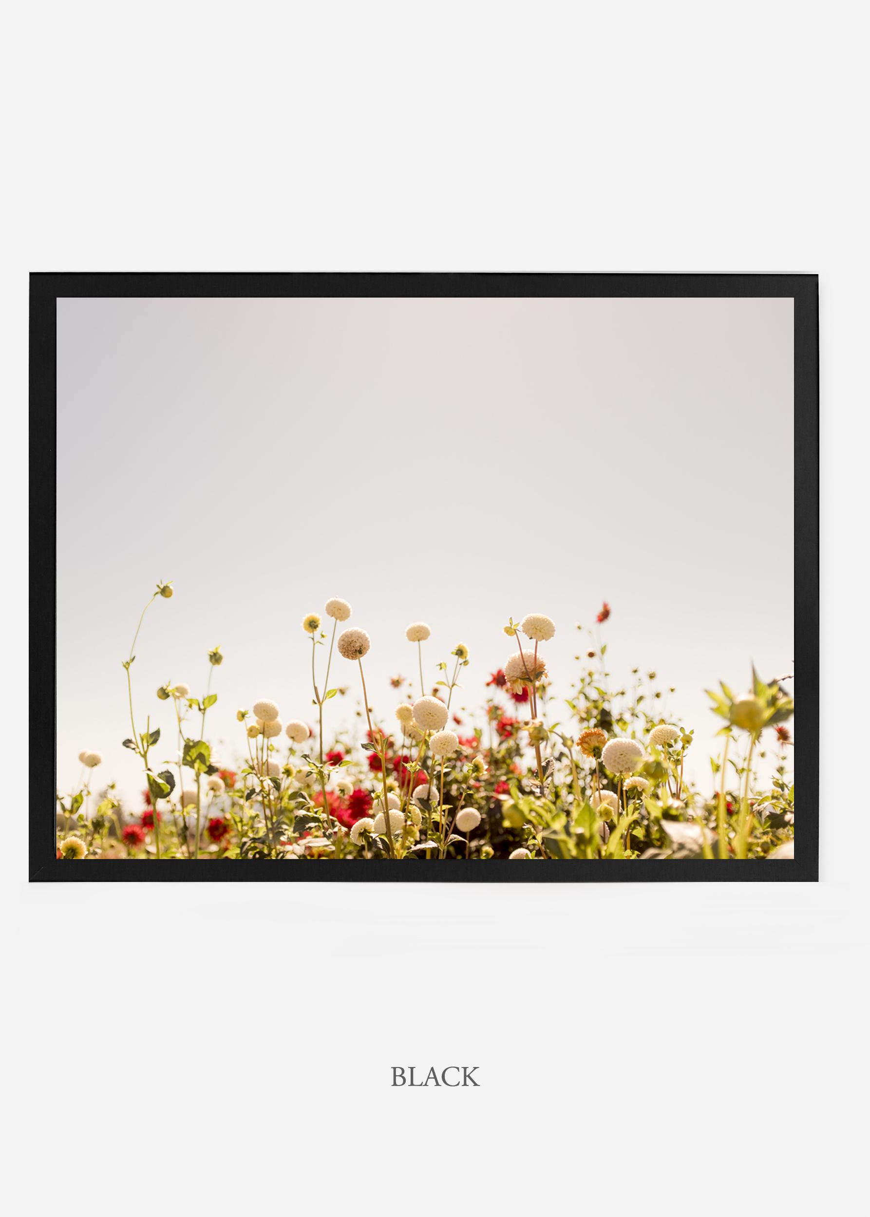 NoMat-BlackFrame-DahliaNo.5-Wilder-California-Art-Floral-Home-decor-Prints-Dahlia-Botanical-Artwork-Interior-design.jpg