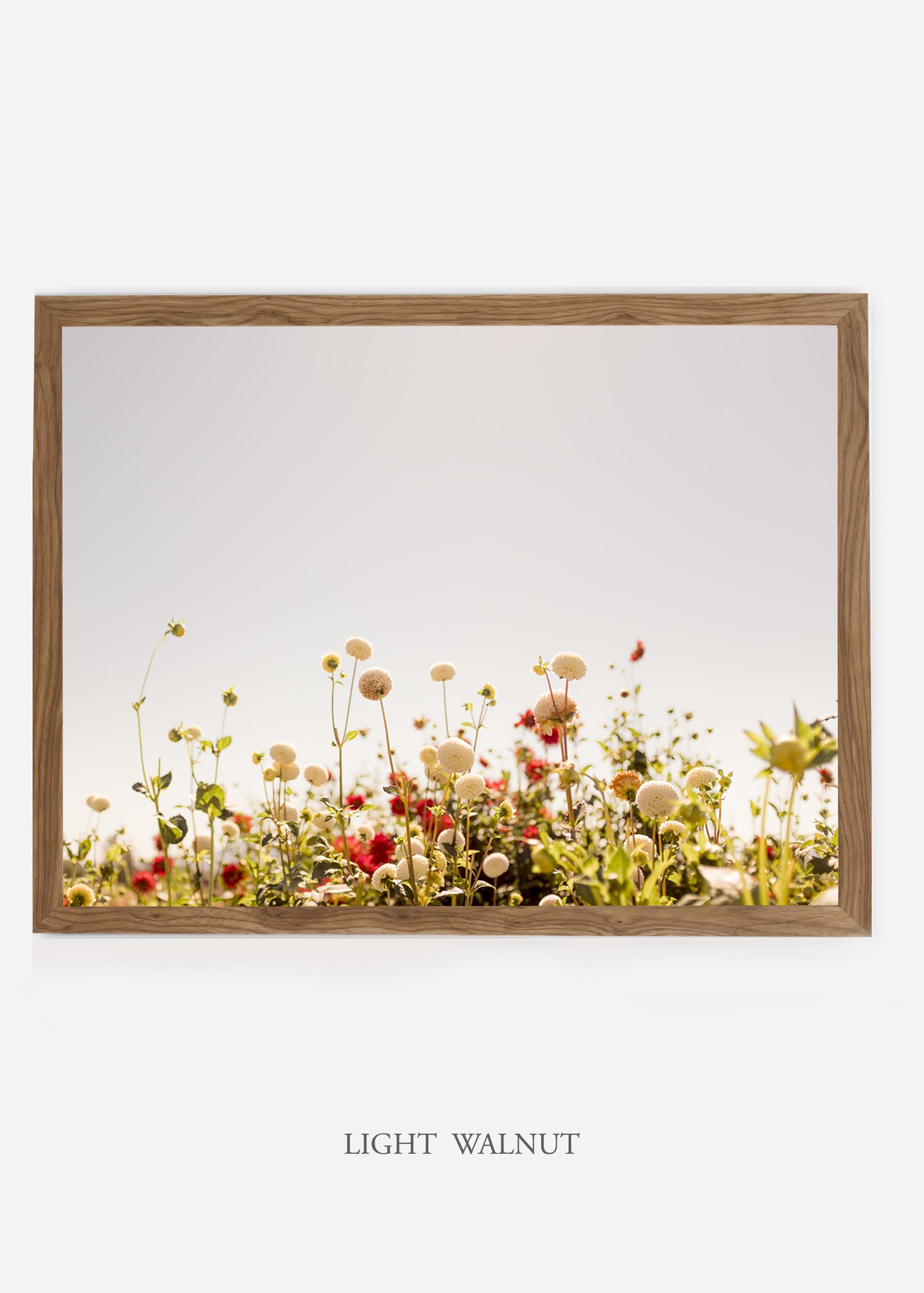 NoMat-LightWalnutFrame-DahliaNo.5-Wilder-California-Art-Floral-Home-decor-Prints-Dahlia-Botanical-Artwork-Interior-design.jpg