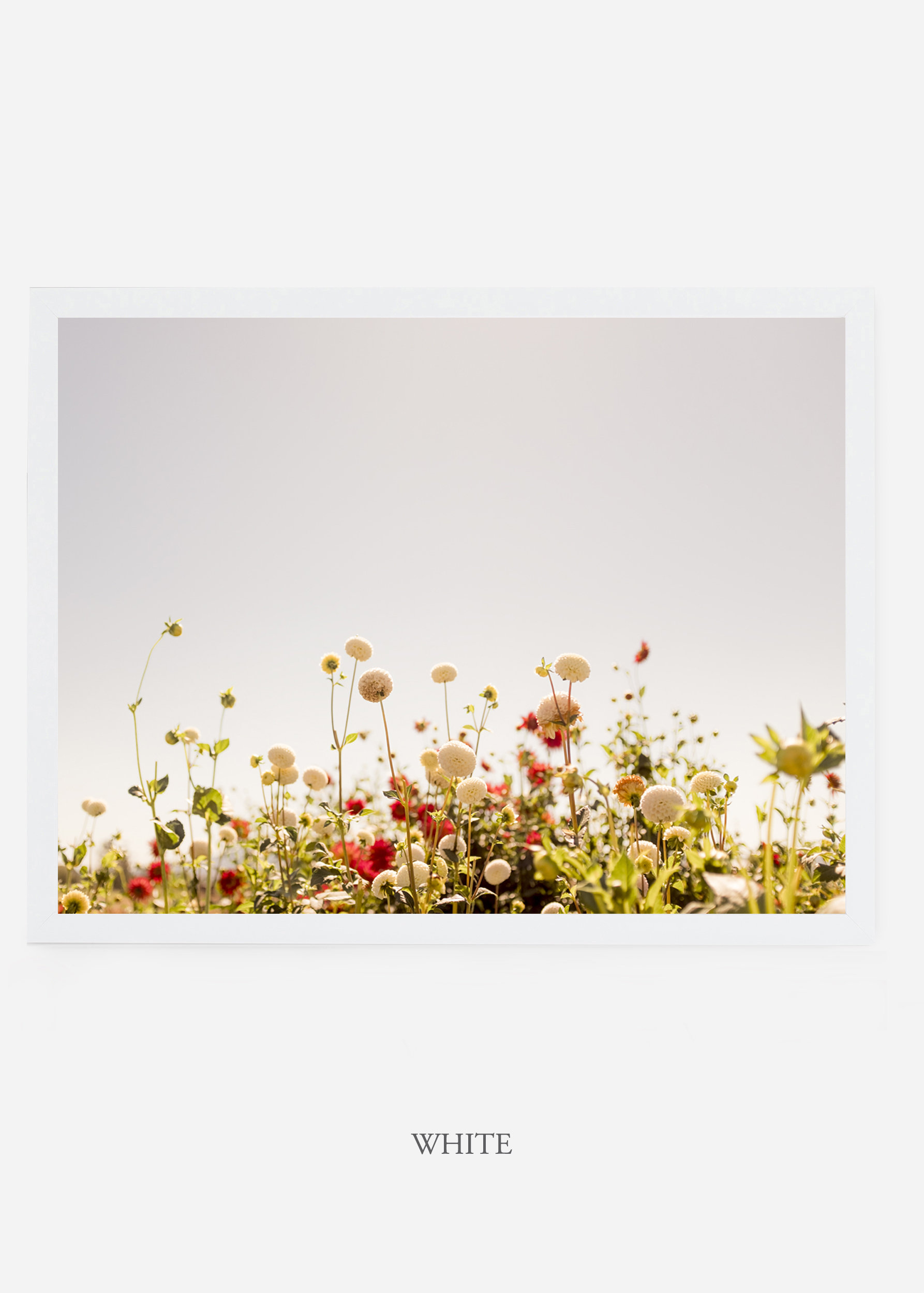 NoMat-WhiteFrame-DahliaNo.5-Wilder-California-Art-Floral-Home-decor-Prints-Dahlia-Botanical-Artwork-Interior-design.jpg