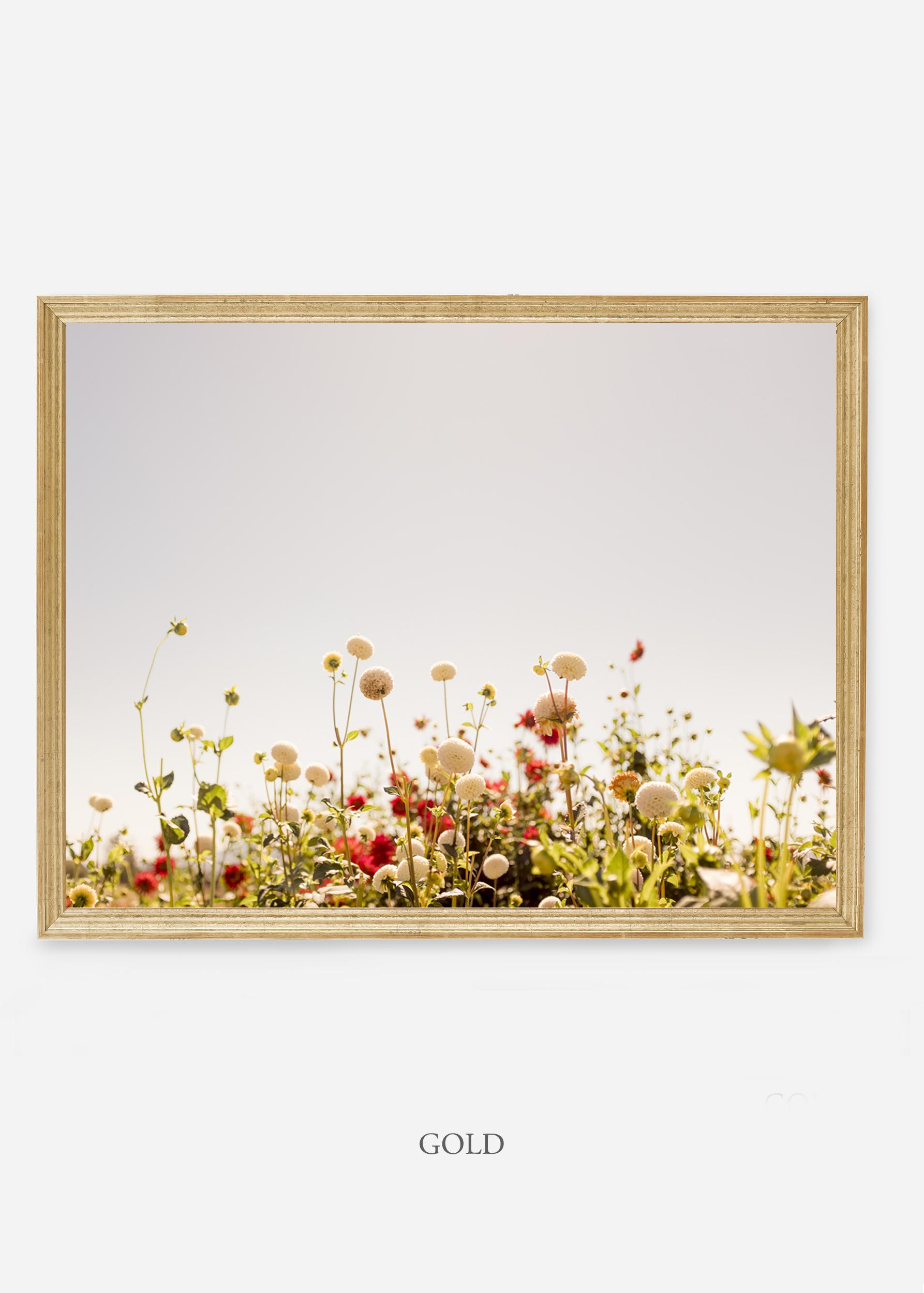 NoMat-Gold-Frame-DahliaNo.5-Wilder-California-Art-Floral-Home-decor-Prints-Dahlia-Botanical-Artwork-Interior-design.jpg