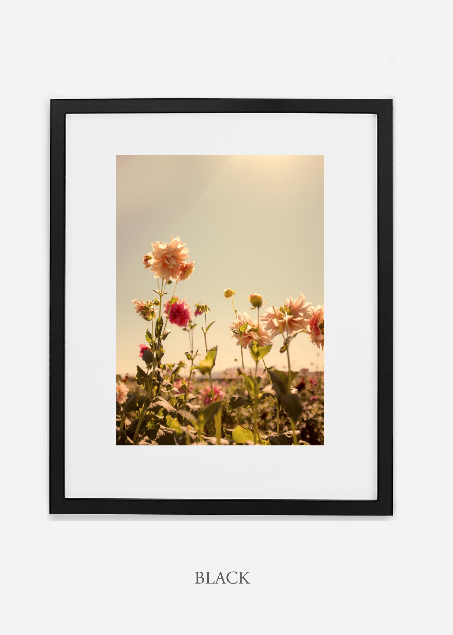 DahliaNo.3_blackframe__mat_interiordesign_botanicalprint_art.jpg