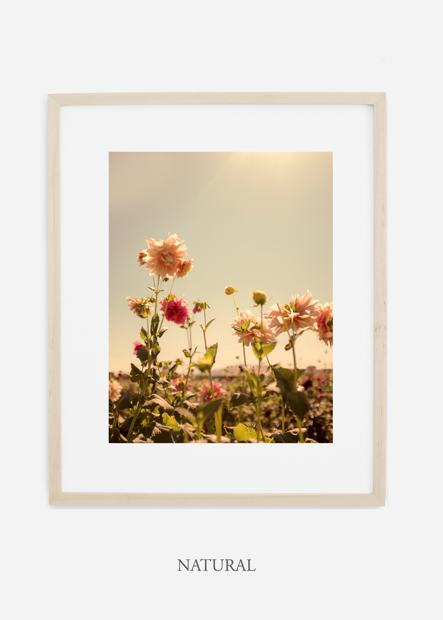 DahliaNo.3_naturalframe__mat_interiordesign_botanicalprint_art.jpg