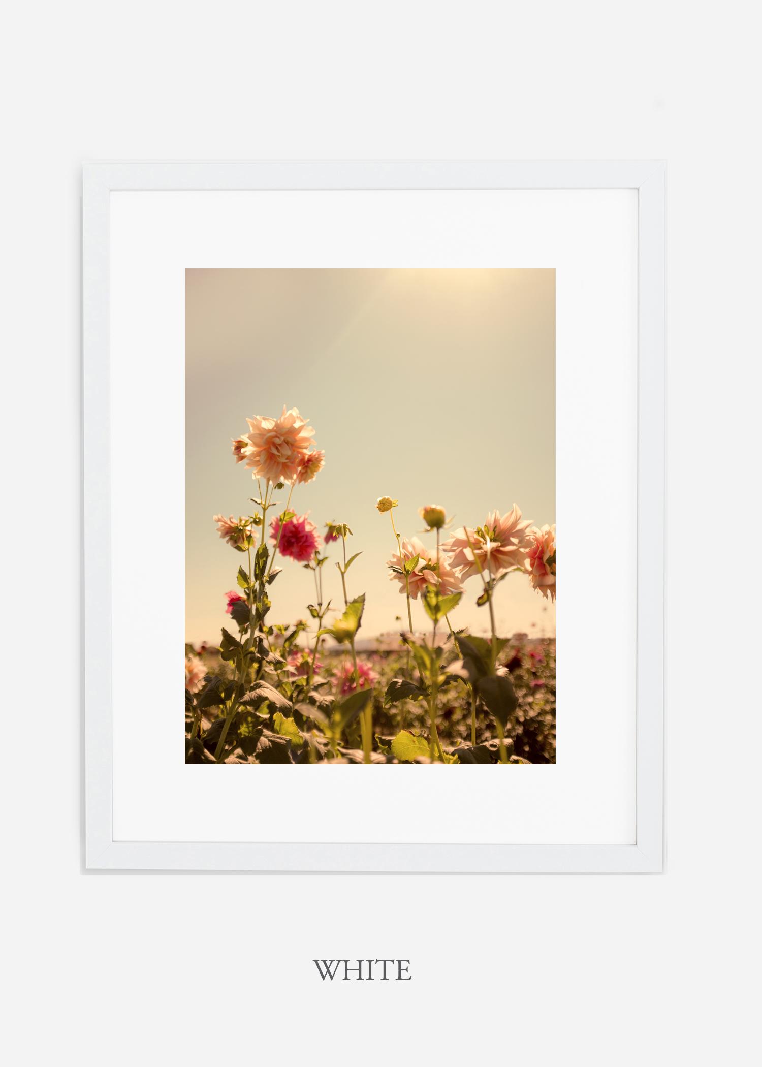 DahliaNo.3_whiteframe__mat_interiordesign_botanicalprint_art.jpg