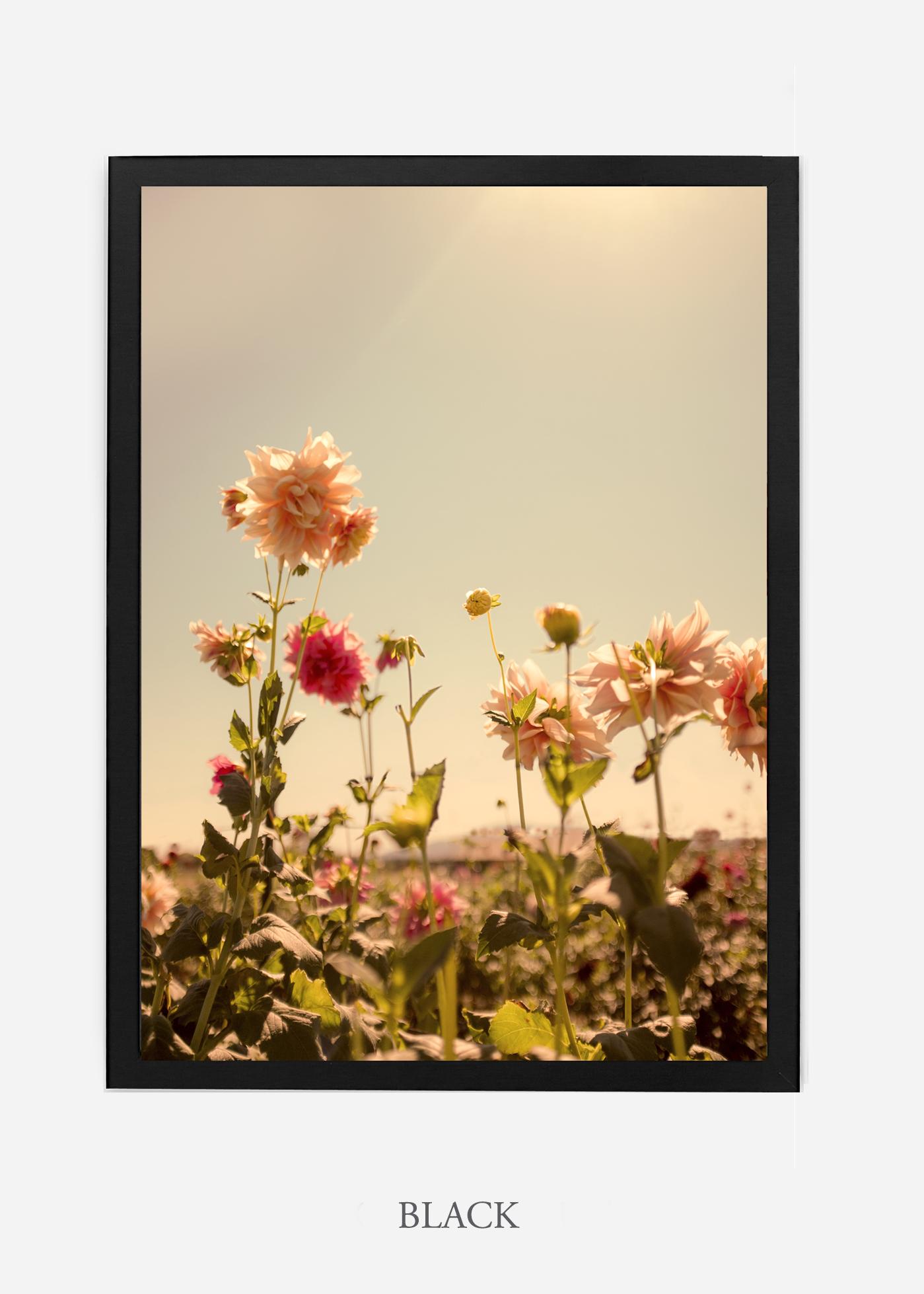 DahliaNo.3_blackframe__NoMat_interiordesign_botanicalprint_art.jpg
