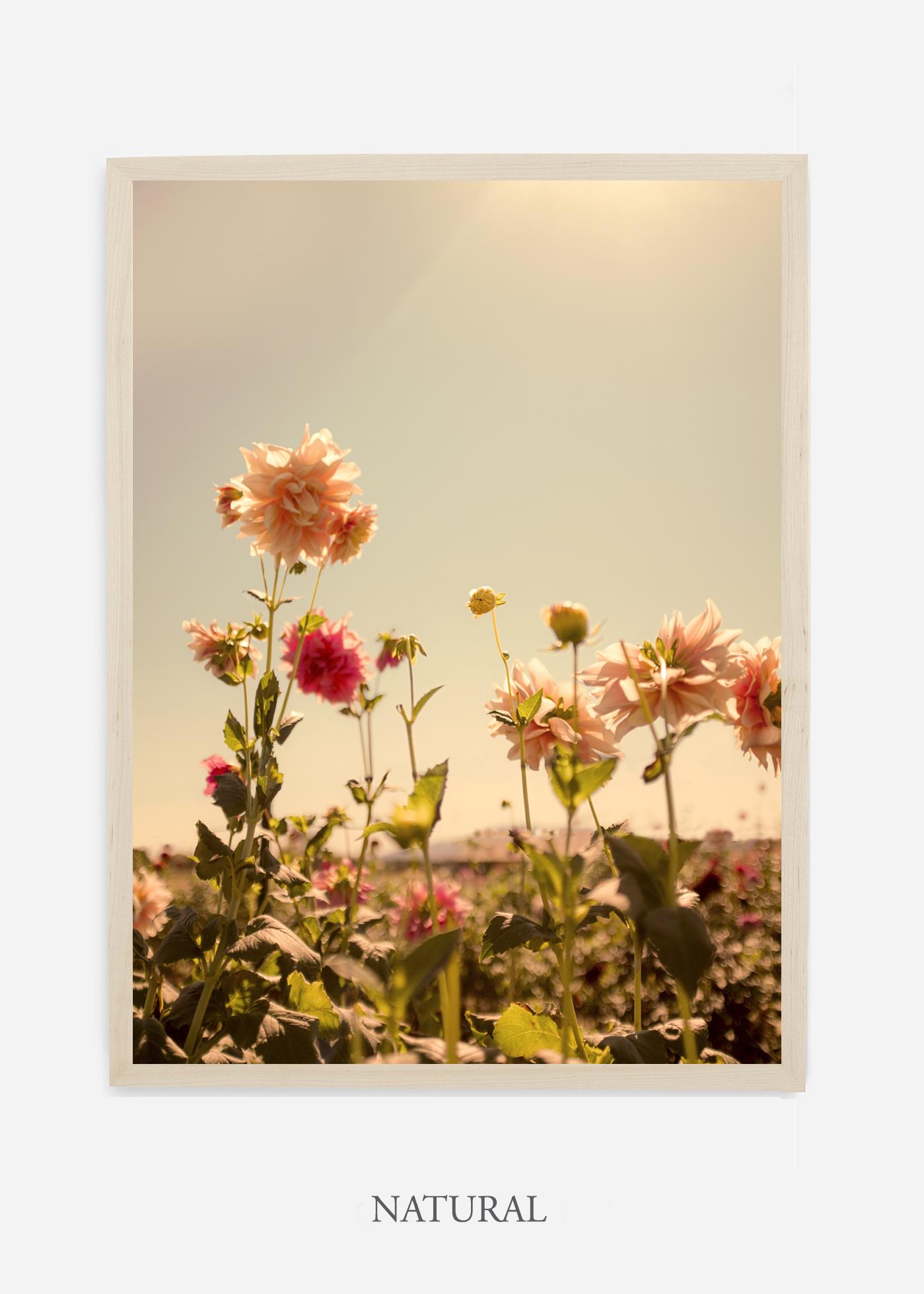 DahliaNo.3_naturalframe__NoMat_interiordesign_botanicalprint_art.jpg