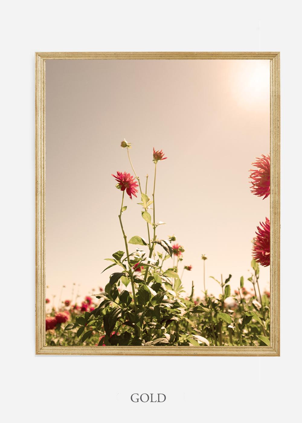 NoMat-Gold-Frame-DahliaNo.2-Wilder-California-Art-Floral-Home-decor-Prints-Dahlia-Botanical-Artwork-Interior-design.jpg