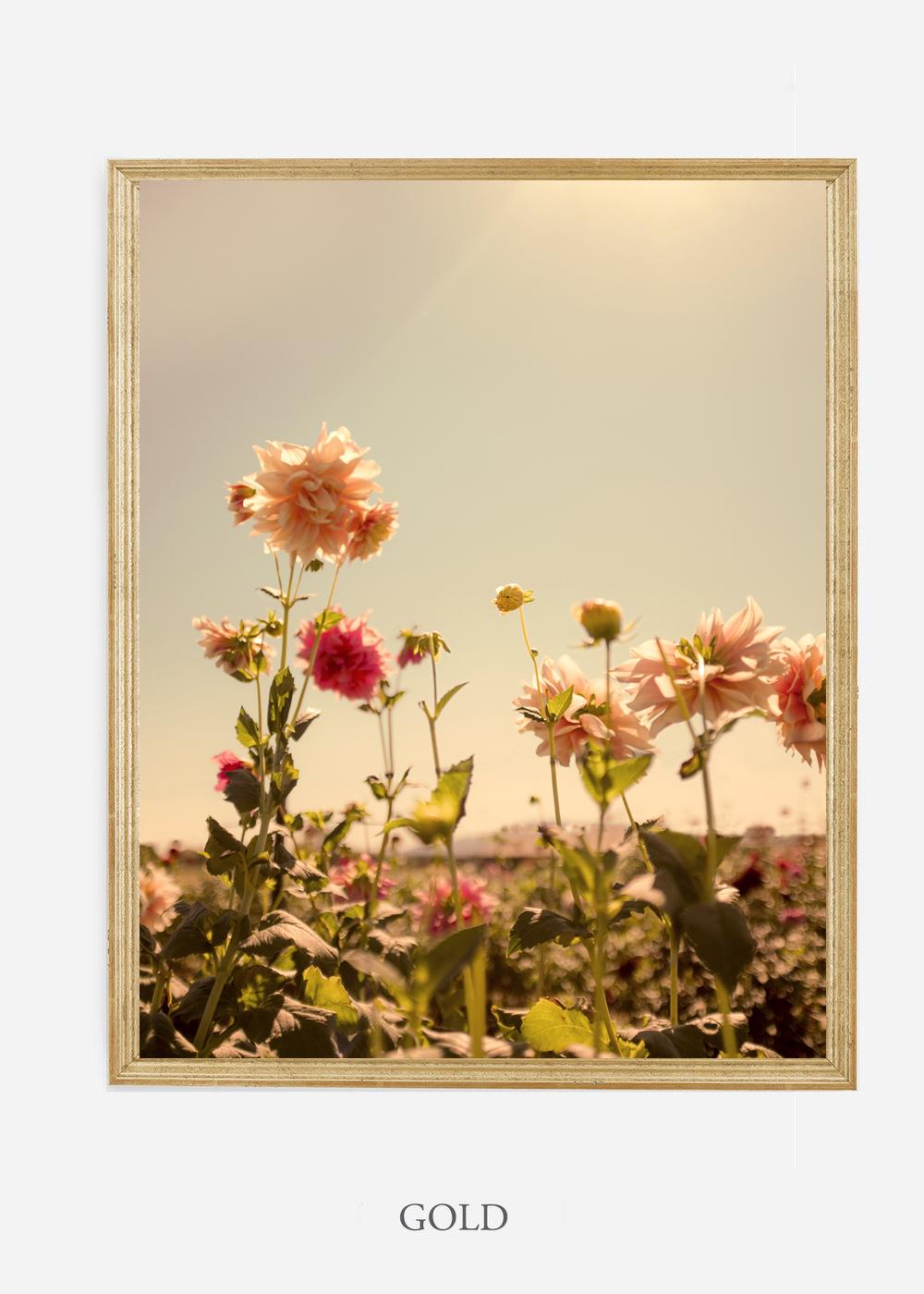 NoMat-Gold-Frame-DahliaNo.3-Wilder-California-Art-Floral-Home-decor-Prints-Dahlia-Botanical-Artwork-Interior-design.jpg