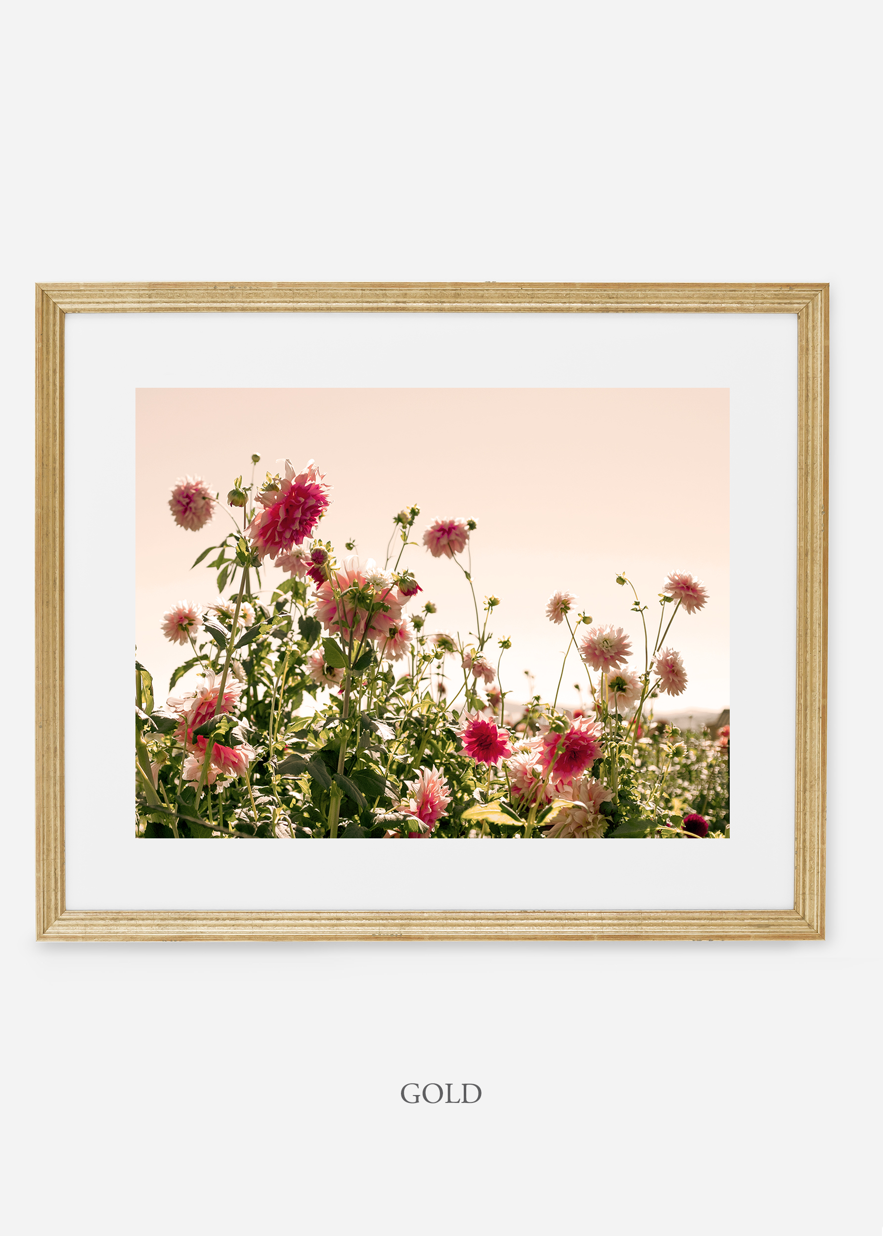 GoldFrame_DahliaNo.7_WilderCalifornia_Art_Floral_Homedecor_Prints_Dahlia_Botanical_Artwork_Interiordesign.jpg