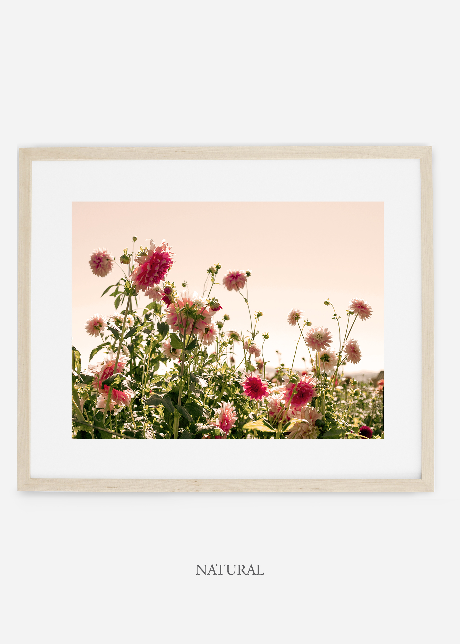 wilder-california-naturalframe-dahlia-7-minimal-botanical-print-art-interior-design.jpg