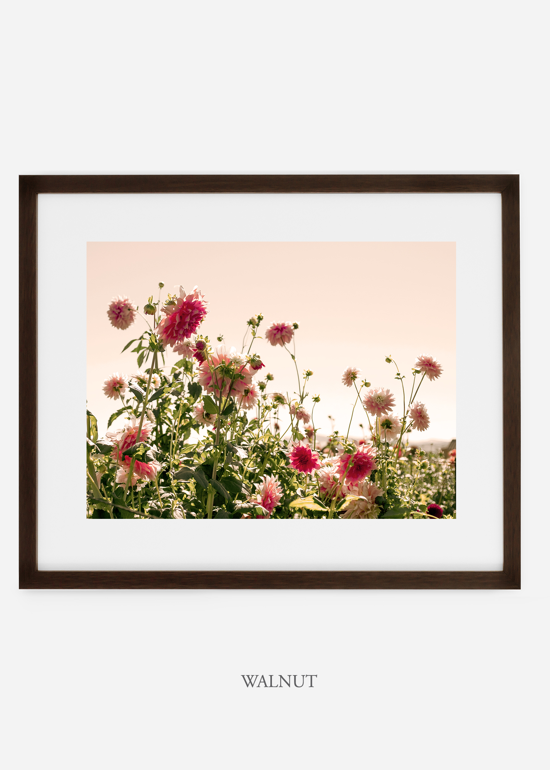 wilder-california-walnutframe-dahlia-7-minimal-botanical-print-art-interior-design.jpg