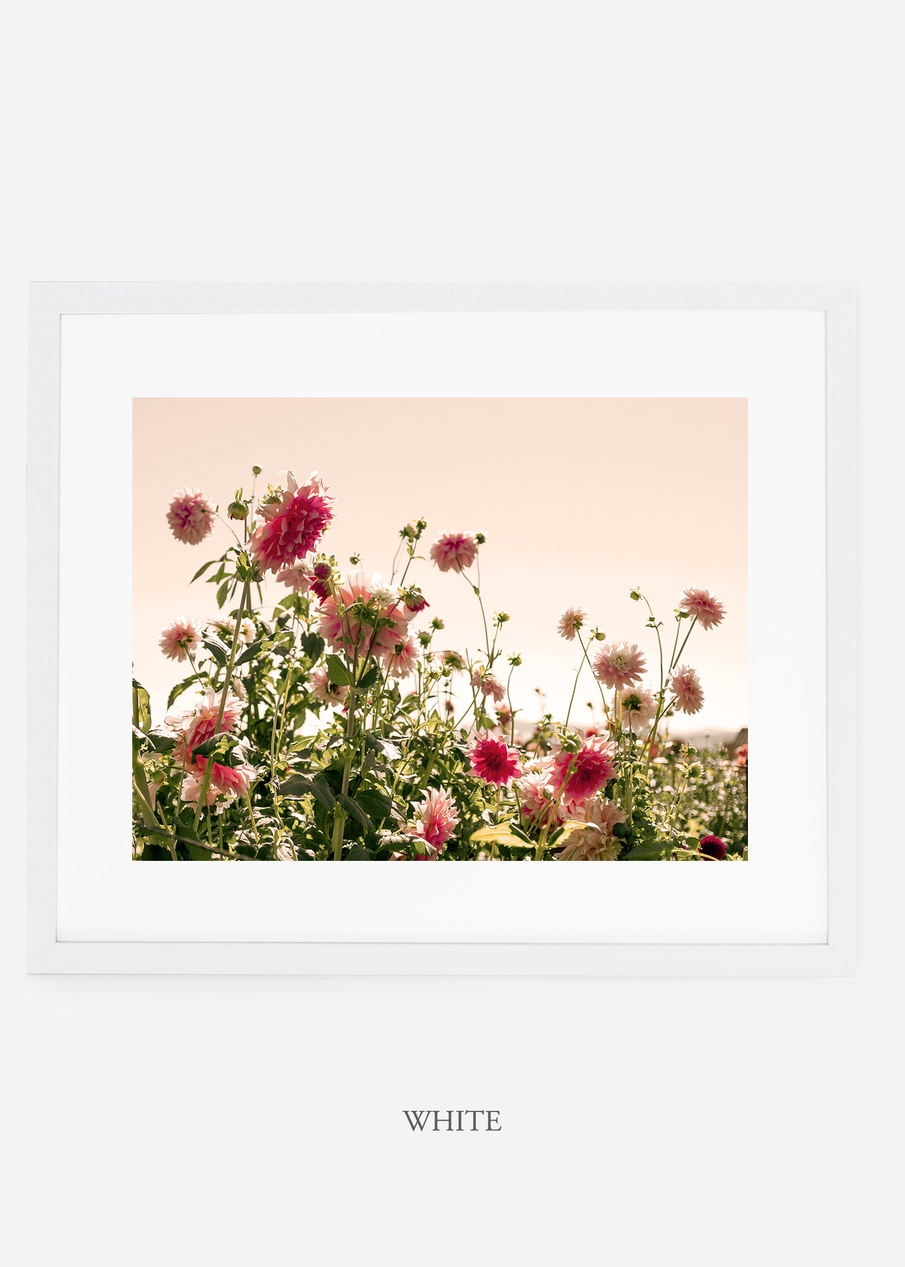 wilder-california-whiteframe-dahlia-7-minimal-botanical-print-art-interior-design.jpg