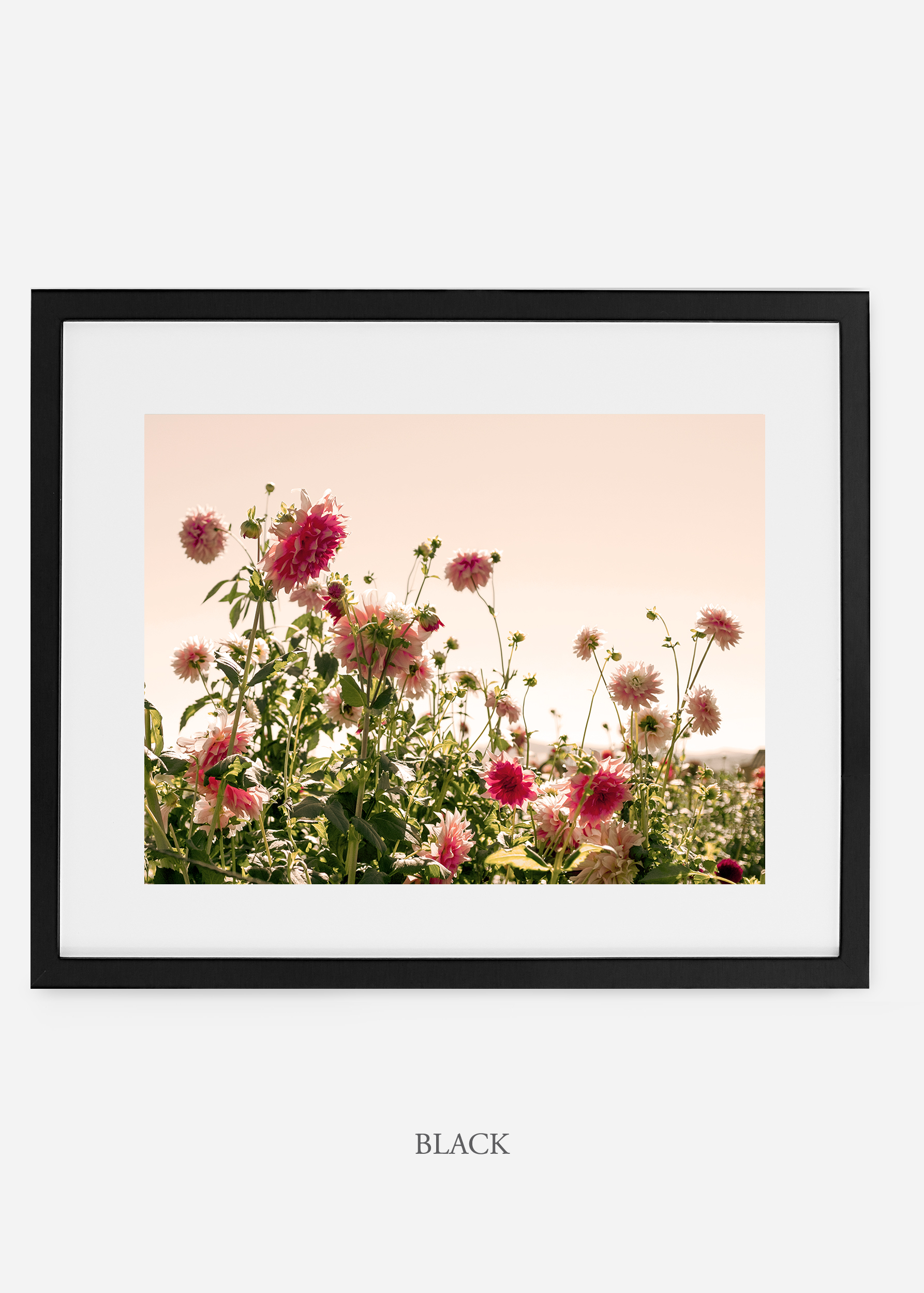 wilder-california-blackframe-dahlia-7-minimal-botanical-print-art-interior-design.jpg