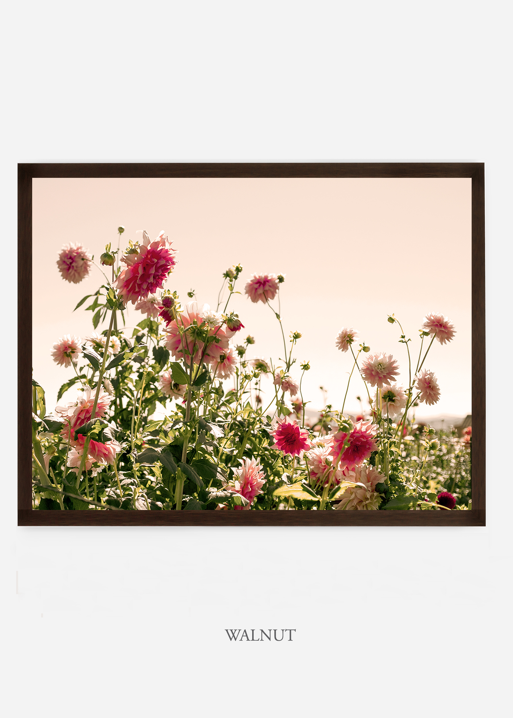 NoMat-DarkWalnutFrame-DahliaNo.7-Wilder-California-Art-Floral-Home-decor-Prints-Dahlia-Botanical-Artwork-Interior-design.jpg