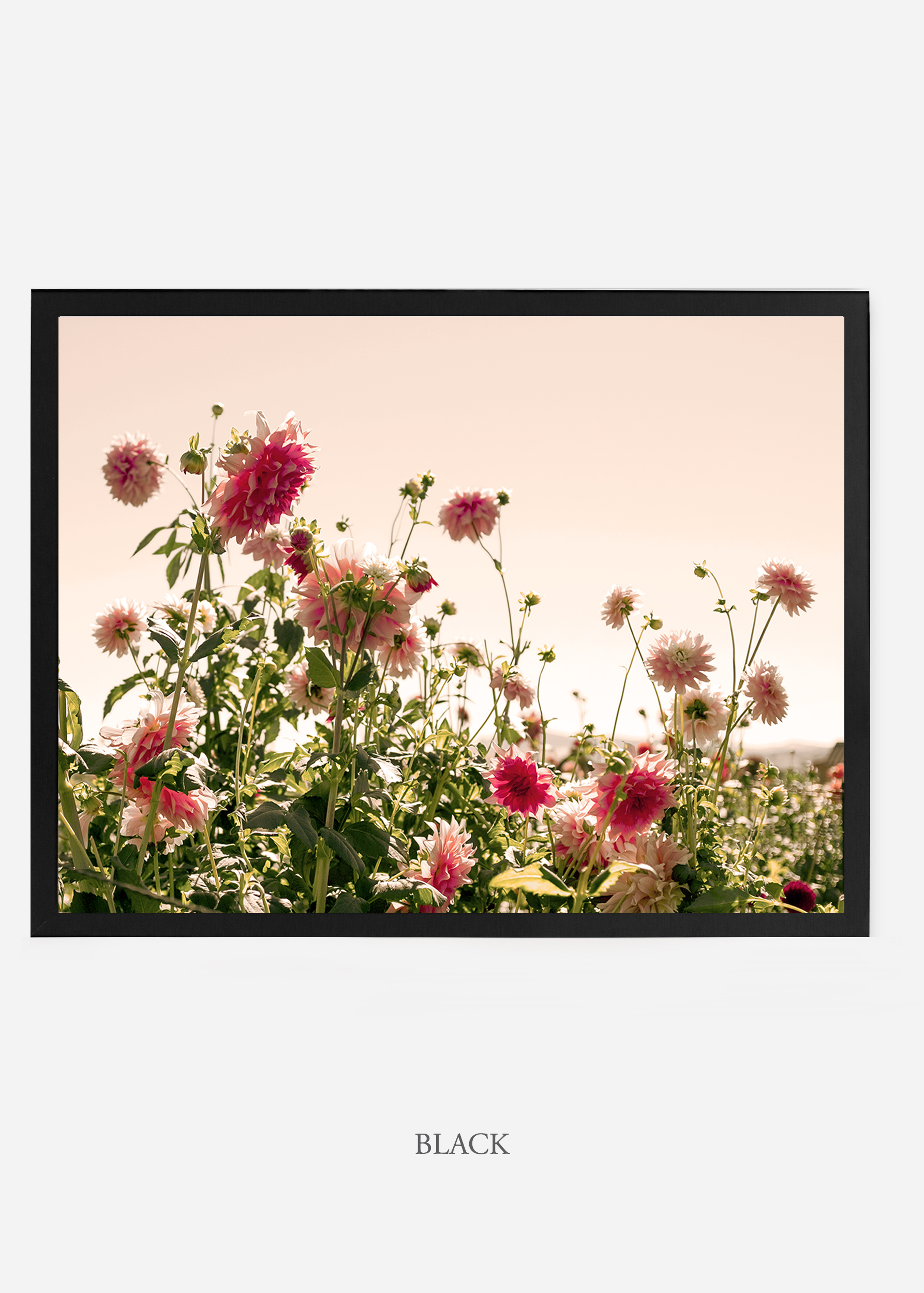 NoMat-BlackFrame-DahliaNo.7-Wilder-California-Art-Floral-Home-decor-Prints-Dahlia-Botanical-Artwork-Interior-design.jpg