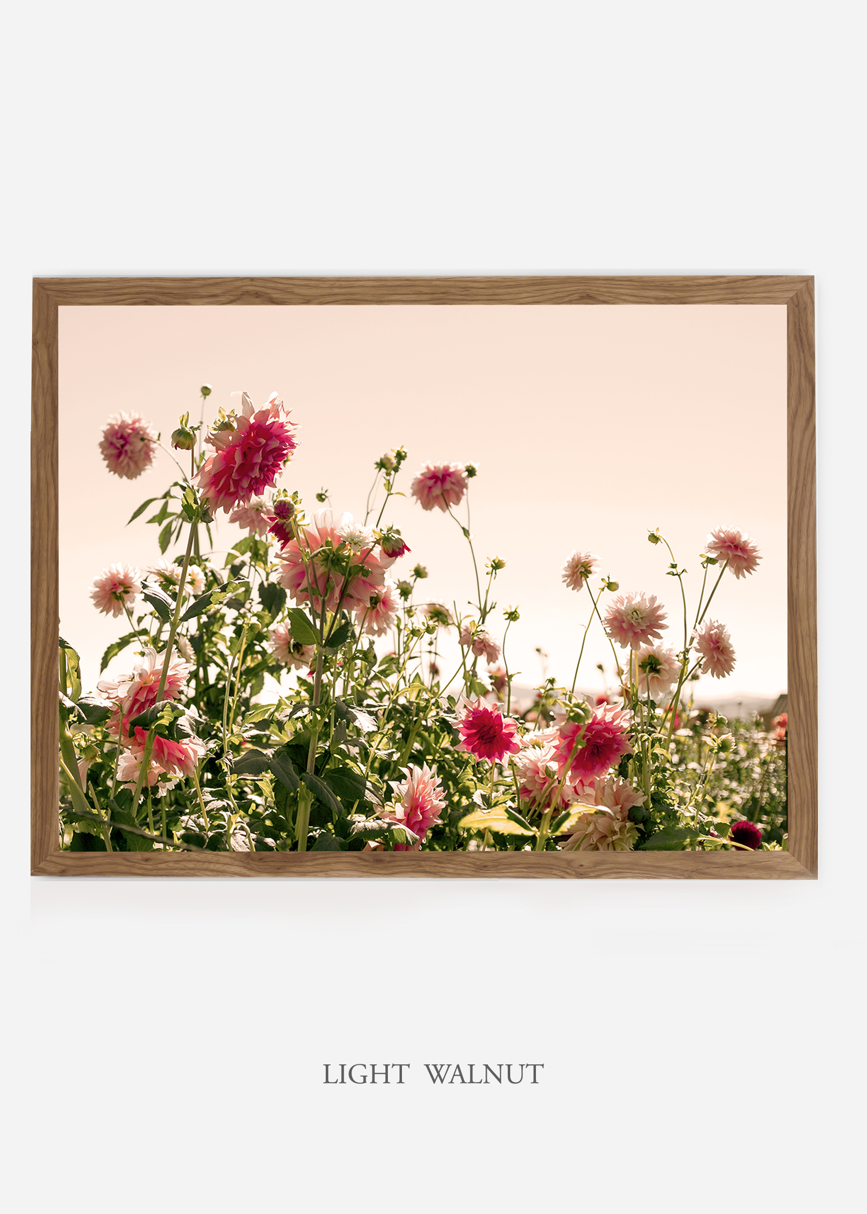 NoMat-LightWalnutFrame-DahliaNo.7-Wilder-California-Art-Floral-Home-decor-Prints-Dahlia-Botanical-Artwork-Interior-design.jpg