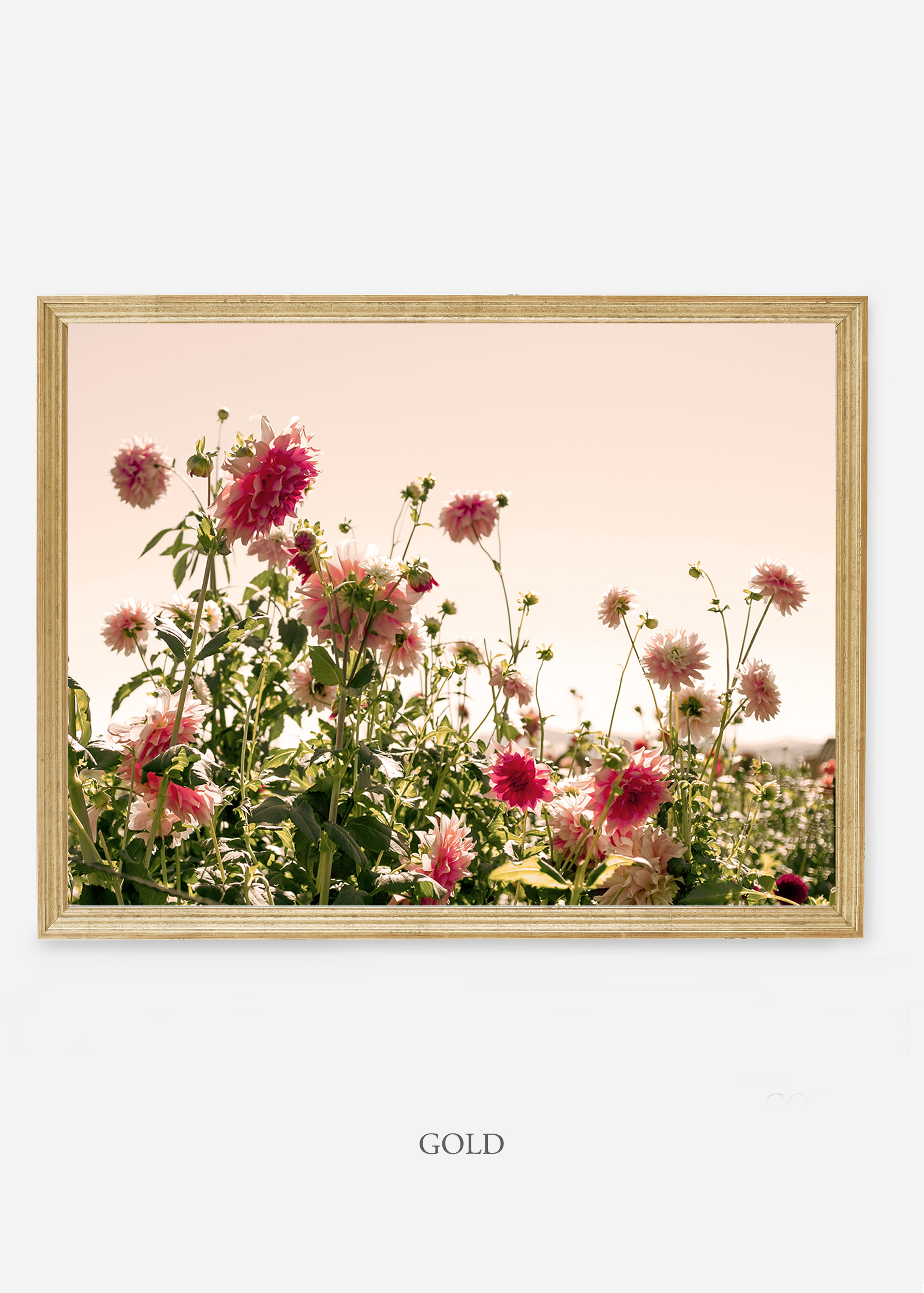 NoMat-Gold-Frame-DahliaNo.7-Wilder-California-Art-Floral-Home-decor-Prints-Dahlia-Botanical-Artwork-Interior-design.jpg