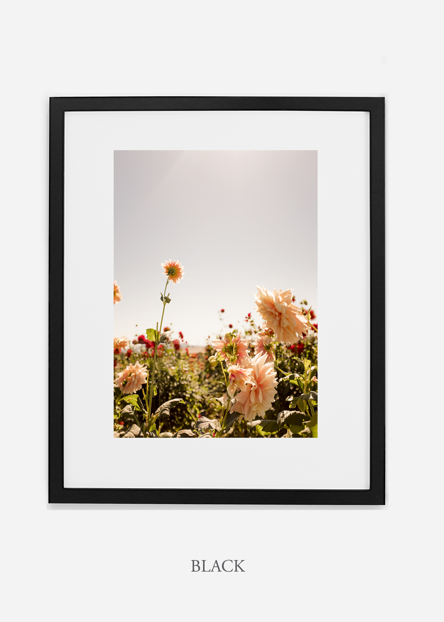 DahliaNo.6-black-frame-mat-interior-design-botanical-print-art-wilder-california-wilder-paper.jpg