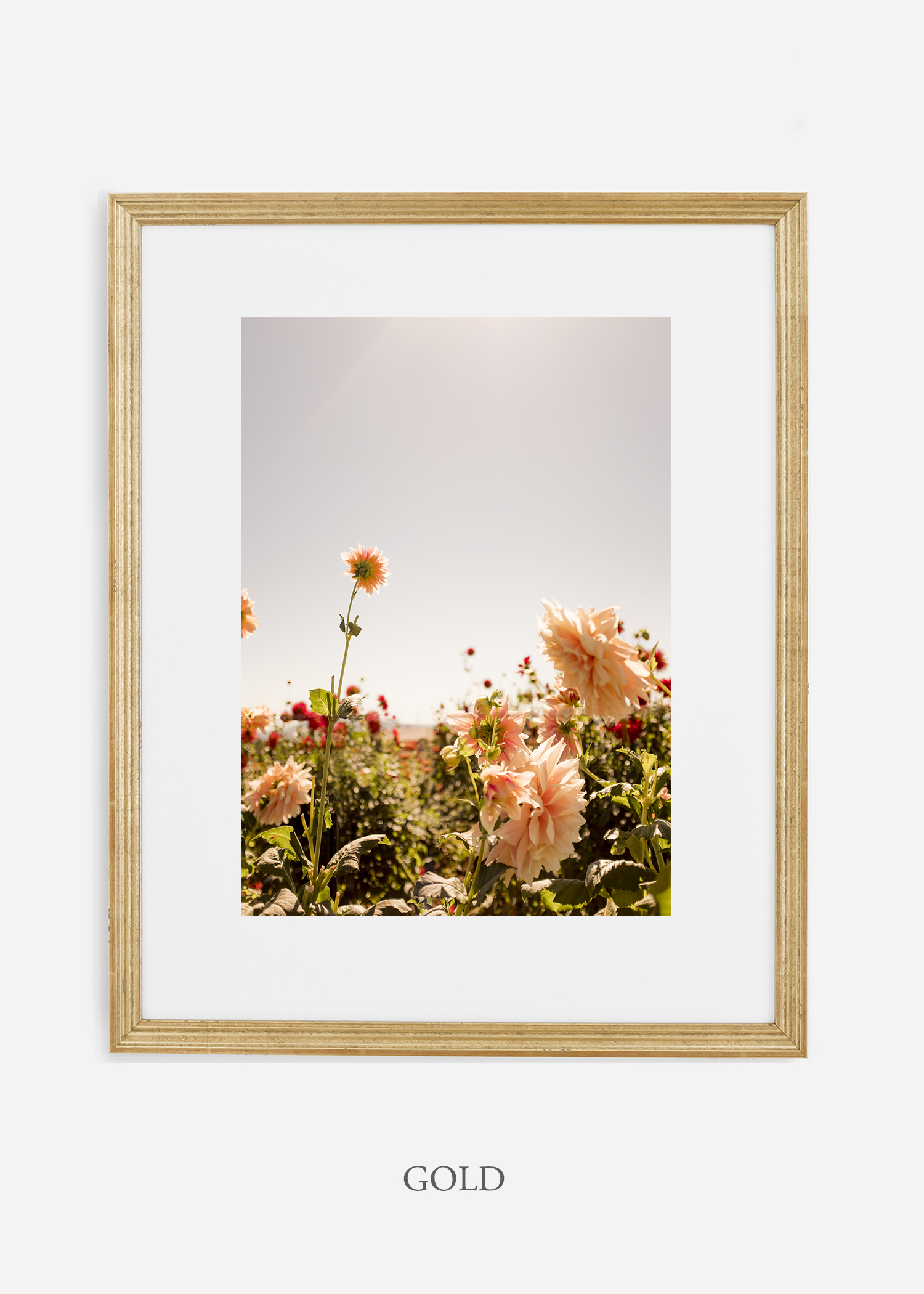 DahliaNo.6-gold-frame-mat-interior-design-botanical-print-art-wilder-california-wilder-paper.jpg