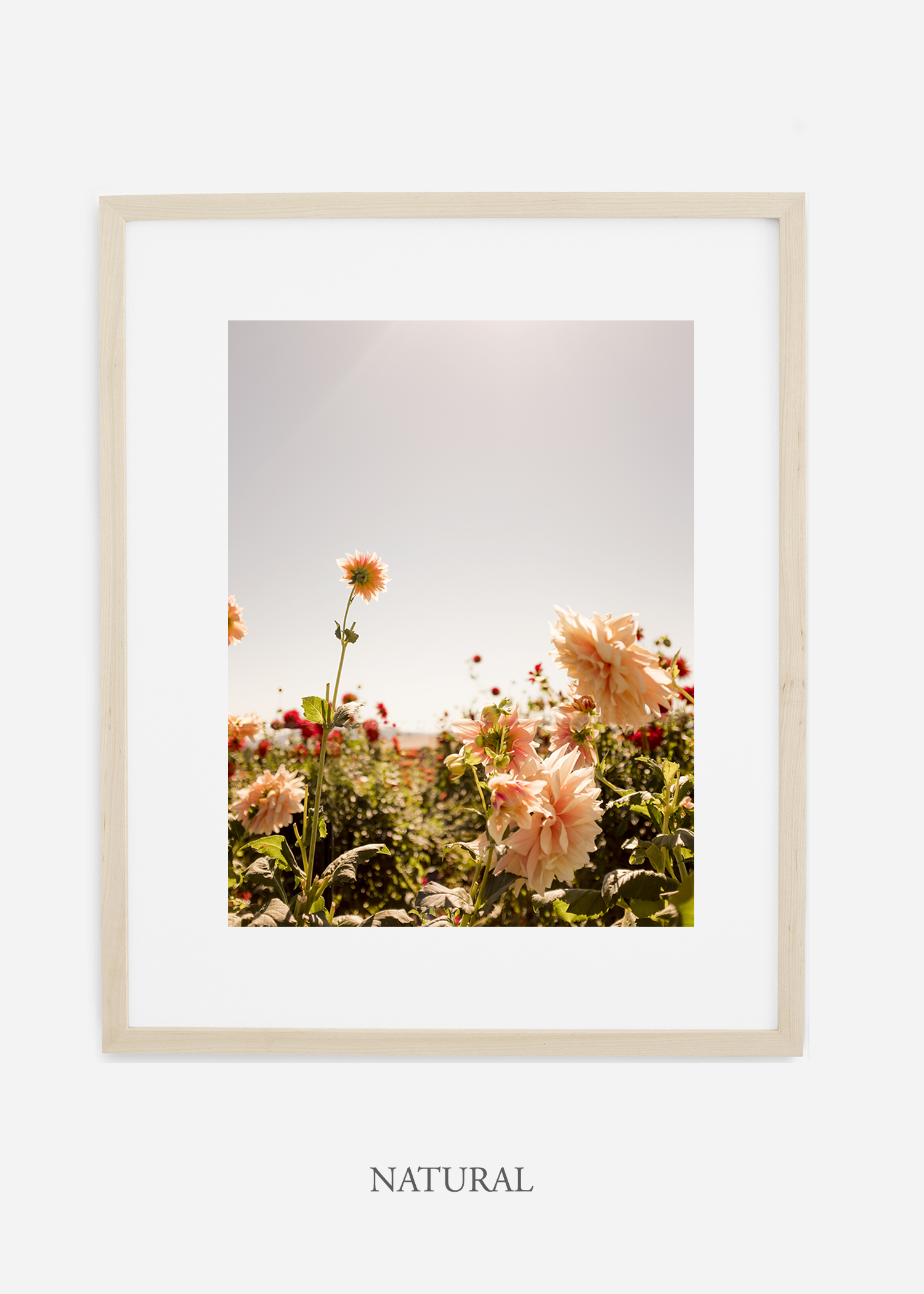 DahliaNo.6-natural-frame-mat-interior-design-botanical-print-art-wilder-california-wilder-paper.jpg
