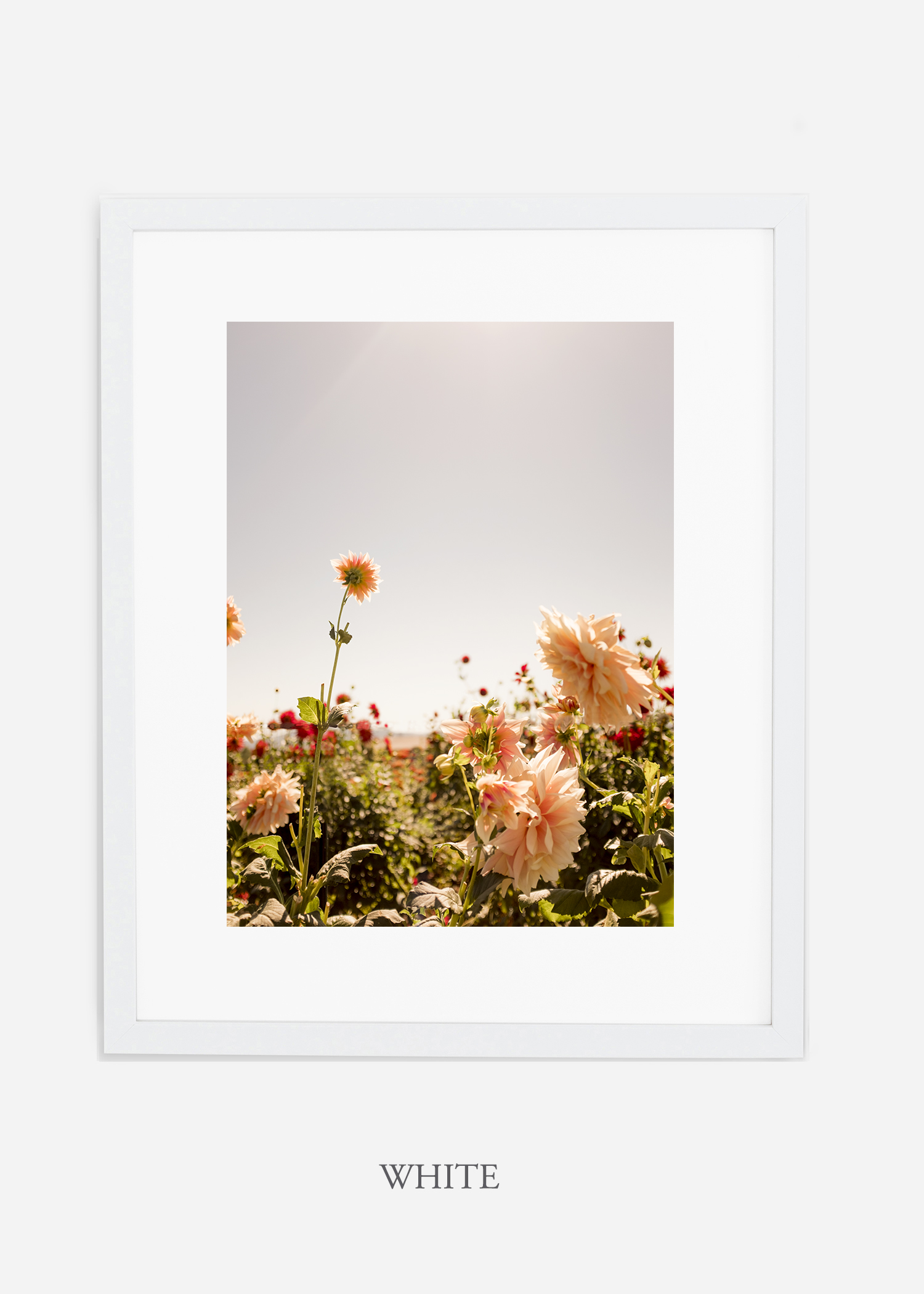 DahliaNo.6-white-frame-mat-interior-design-botanical-print-art-wilder-california-wilder-paper.jpg