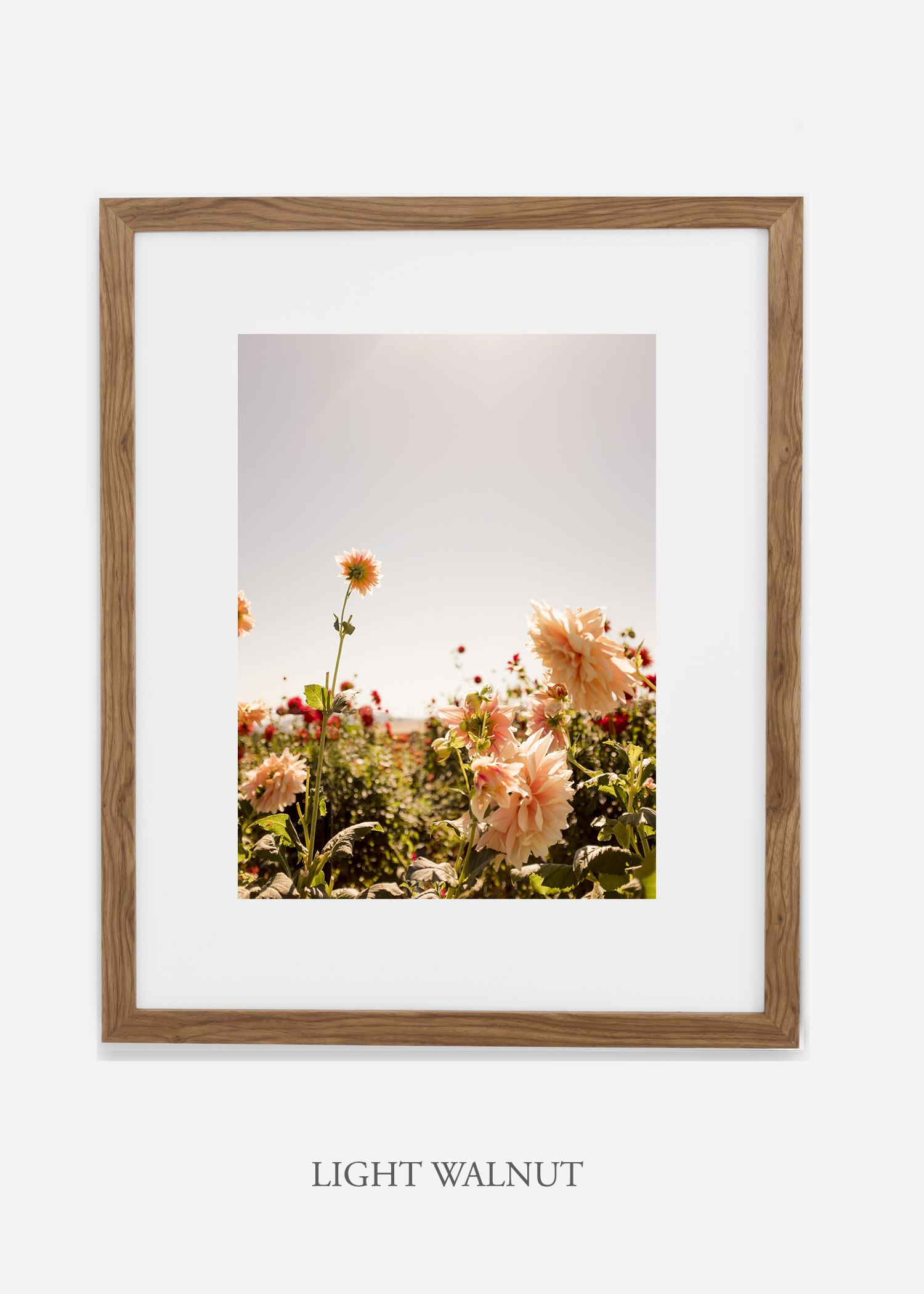 DahliaNo.6-light-walnut-frame-mat-interior-design-botanical-print-art-wilder-california-wilder-paper.jpg