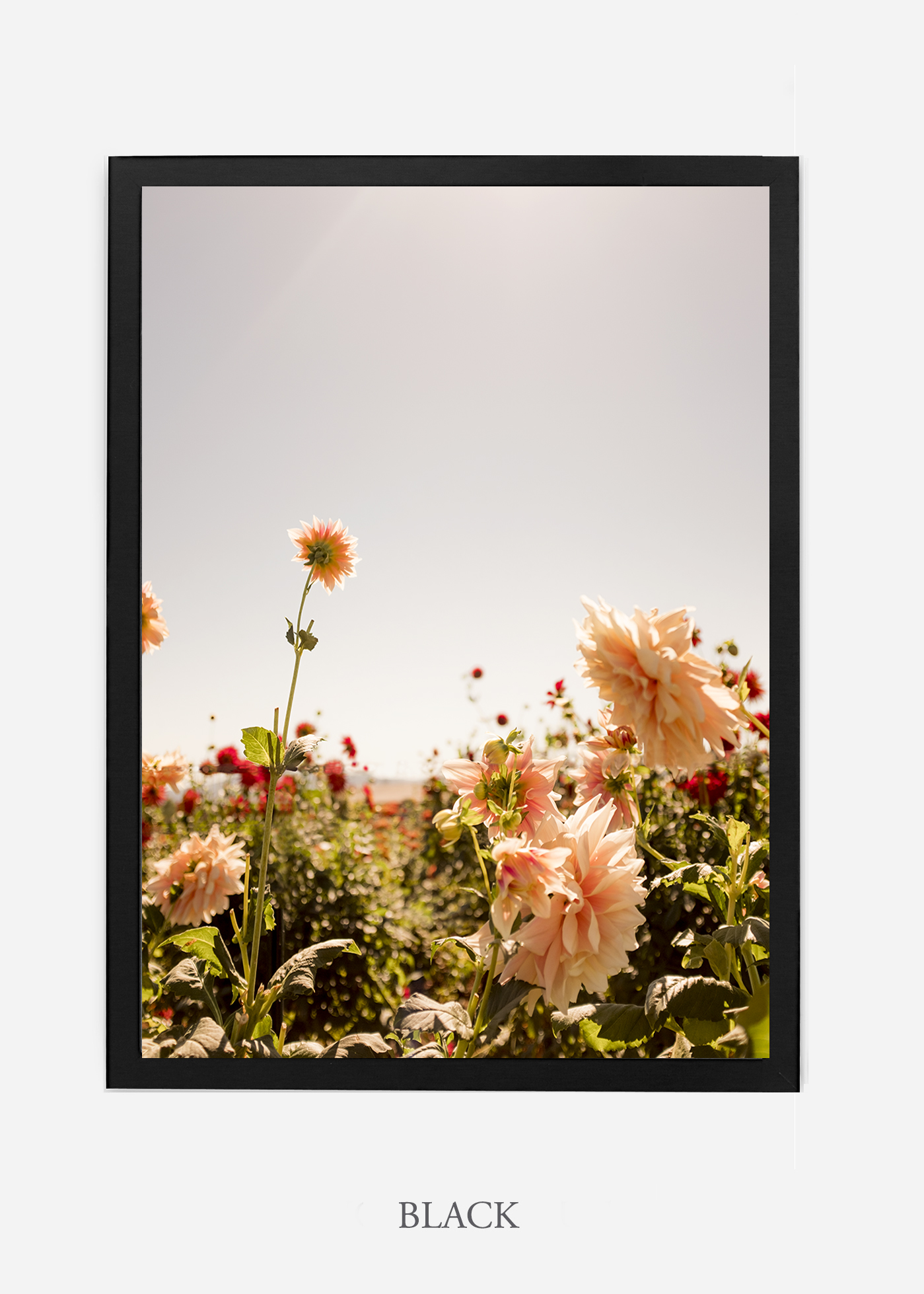 DahliaNo.6-black-frame-interior-design-botanical-print-art-wilder-california-wilder-paper.jpg