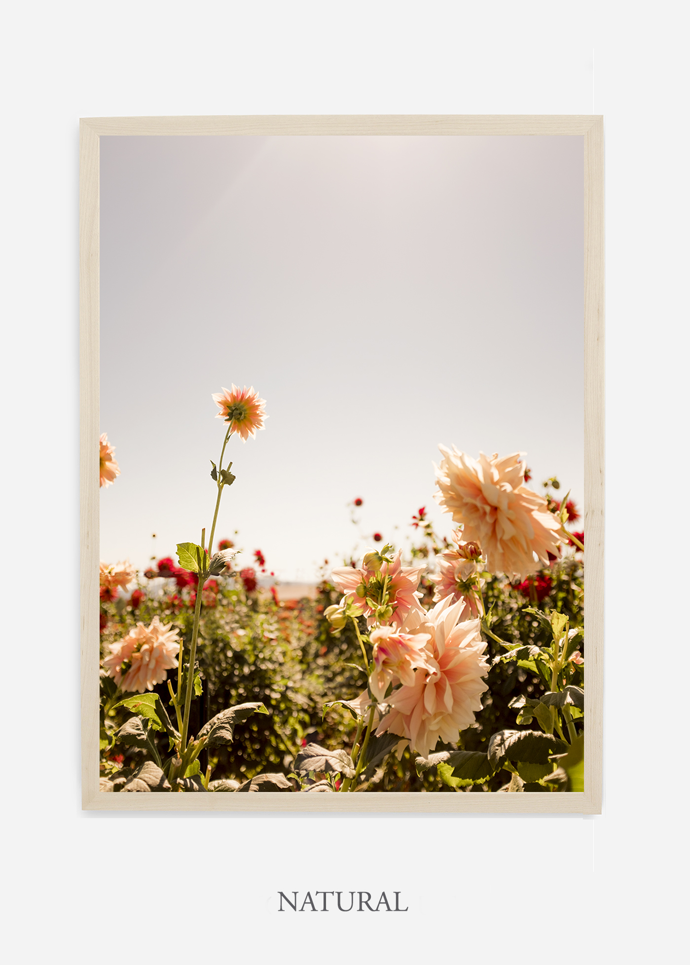 DahliaNo.6-natural-frame-interior-design-botanical-print-art-wilder-california-wilder-paper.jpg