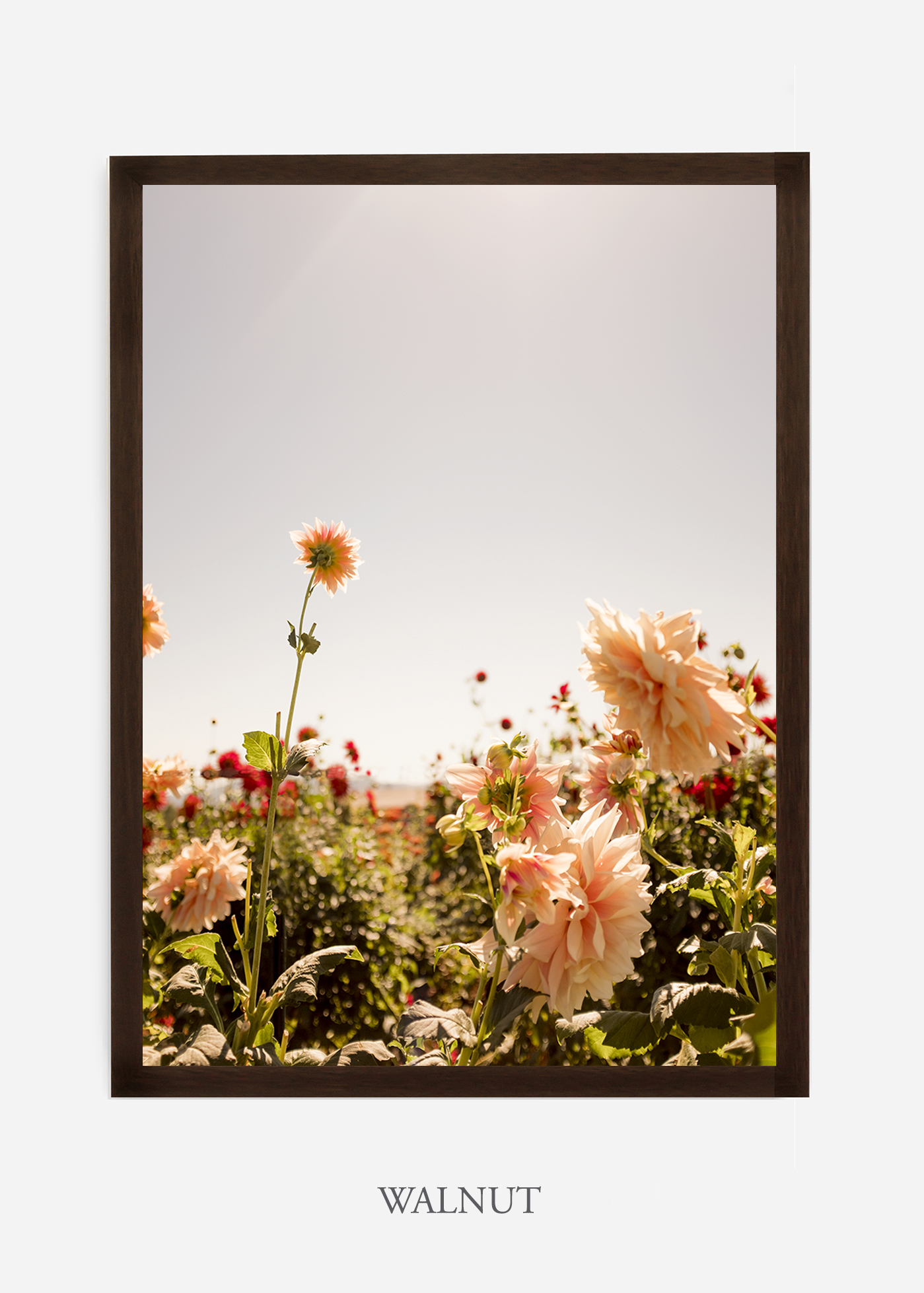 DahliaNo.6-walnut-frame-interior-design-botanical-print-art-wilder-california-wilder-paper.jpg