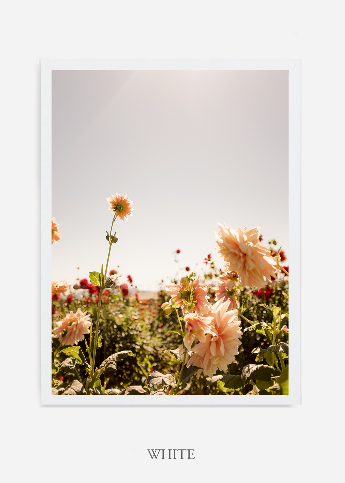 DahliaNo.6-white-frame-interior-design-botanical-print-art-wilder-california-wilder-paper.jpg