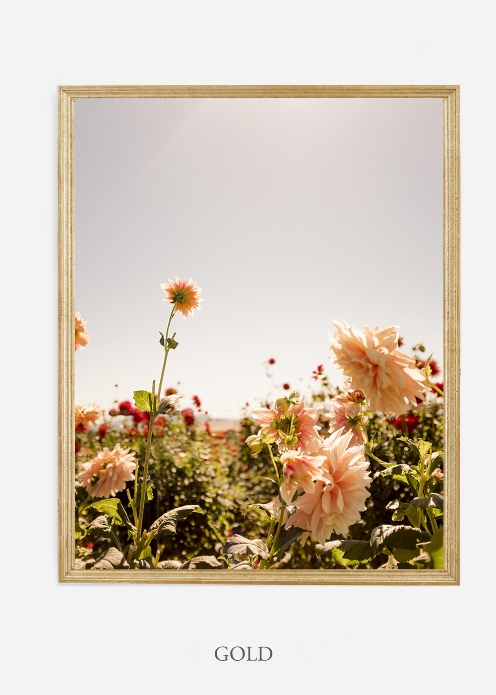 NoMat-Gold-Frame-DahliaNo.6-Wilder-California-Art-Floral-Home-decor-Prints-Dahlia-Botanical-Artwork-Interior-design.jpg