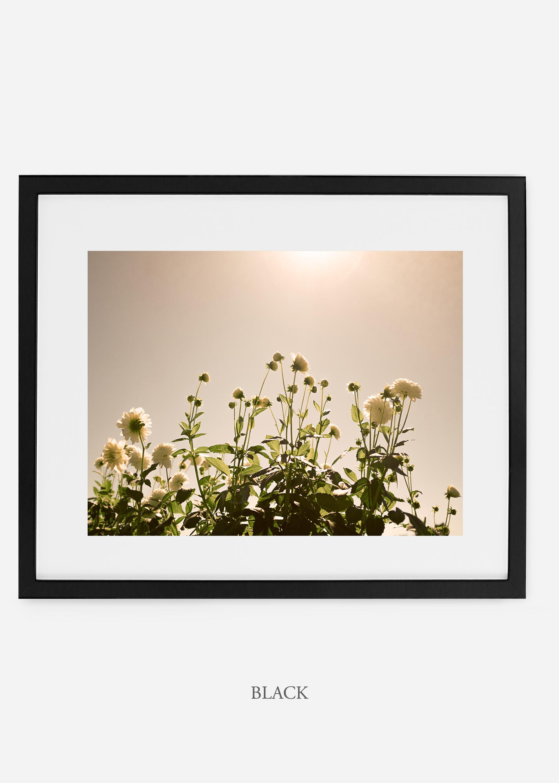 wilder-california-blackframe-dahlia-7-minimal-botanical-print-art-interior-design.jpg