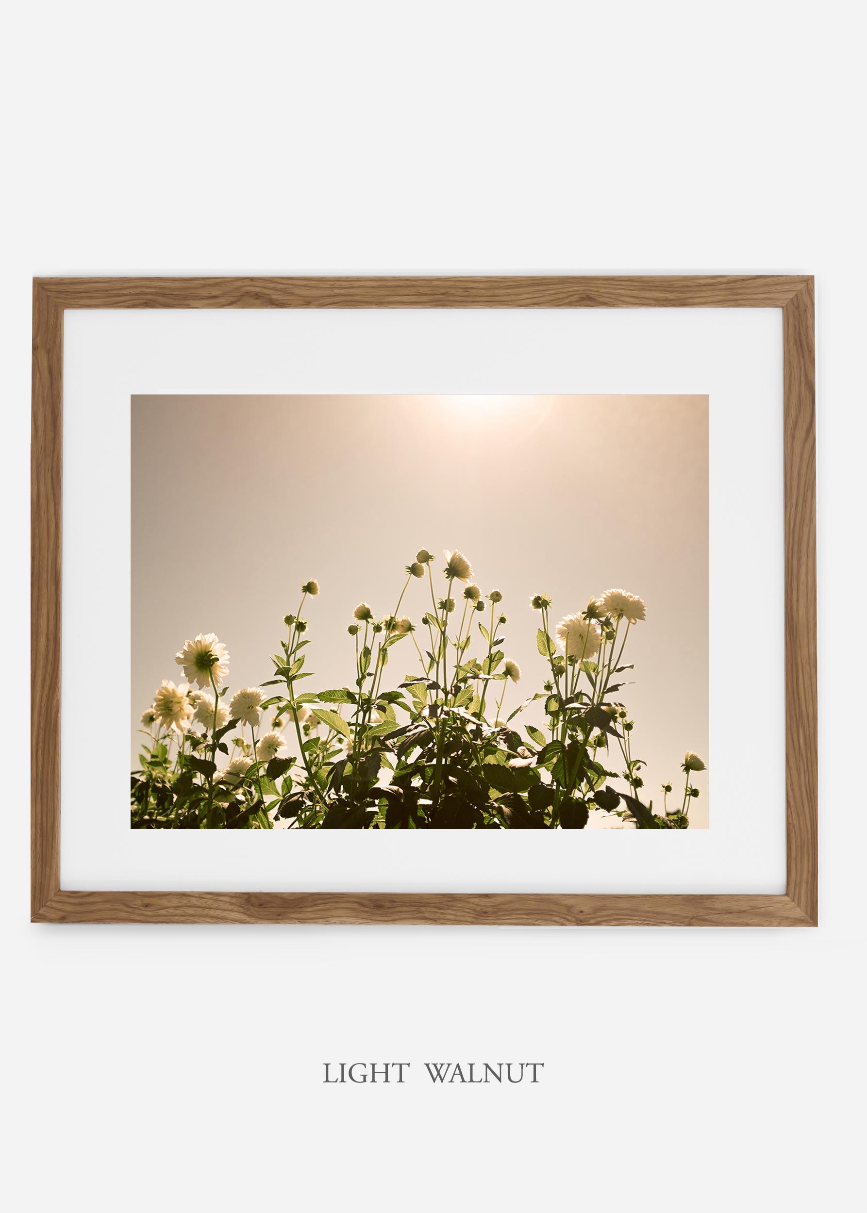 wilder-california-lightwalnutframe-dahlia-7-minimal-botanical-print-art-interior-design.jpg