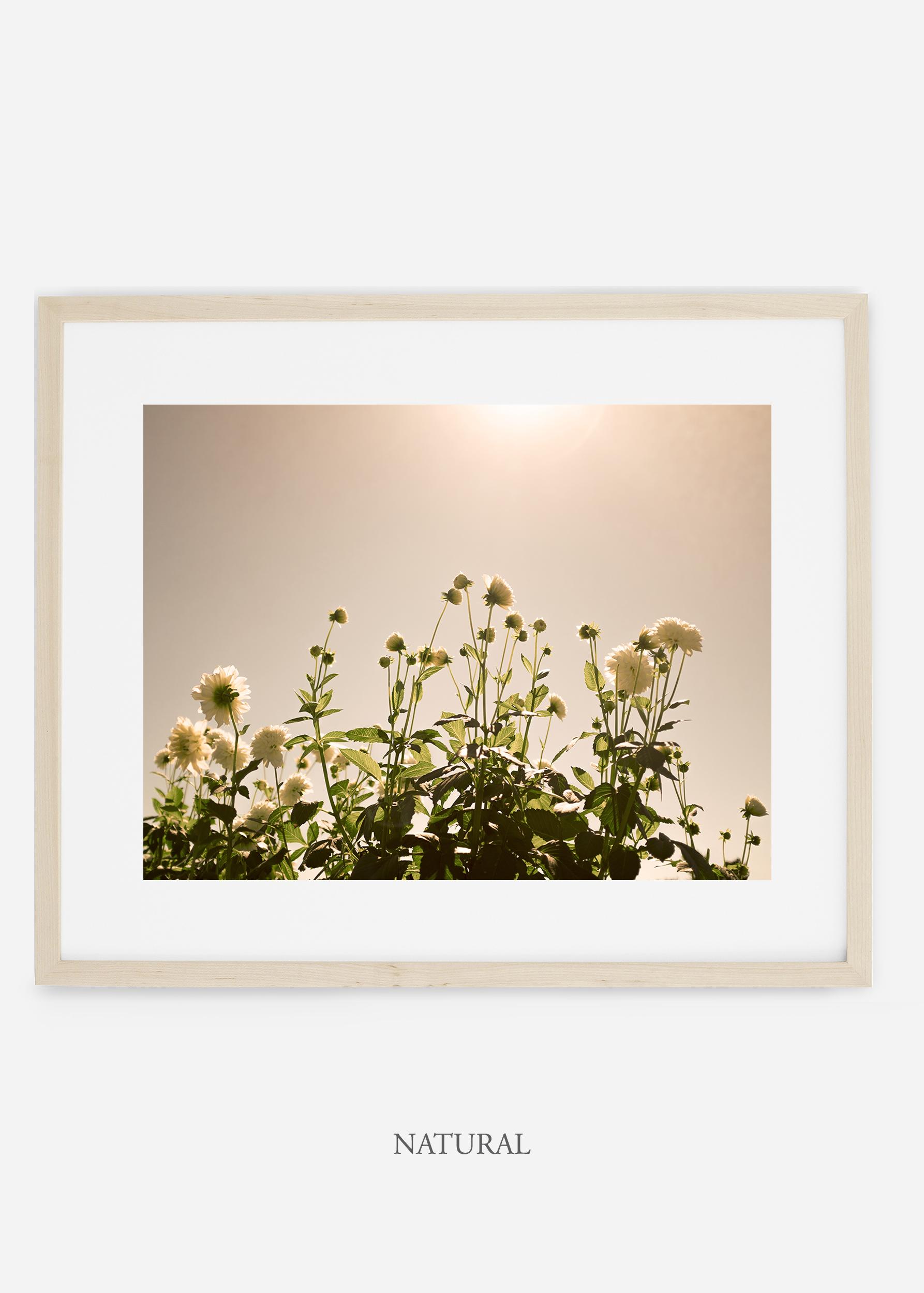 wilder-california-naturalframe-dahlia-7-minimal-botanical-print-art-interior-design.jpg