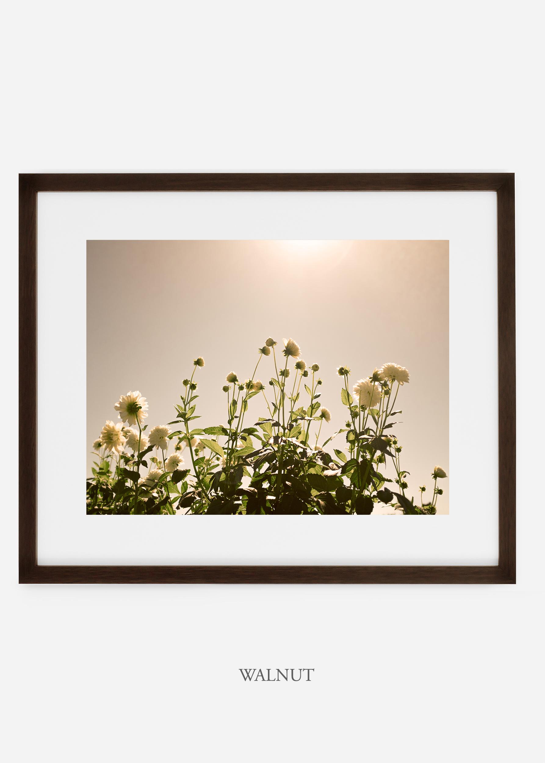 wilder-california-walnutframe-dahlia-7-minimal-botanical-print-art-interior-design.jpg