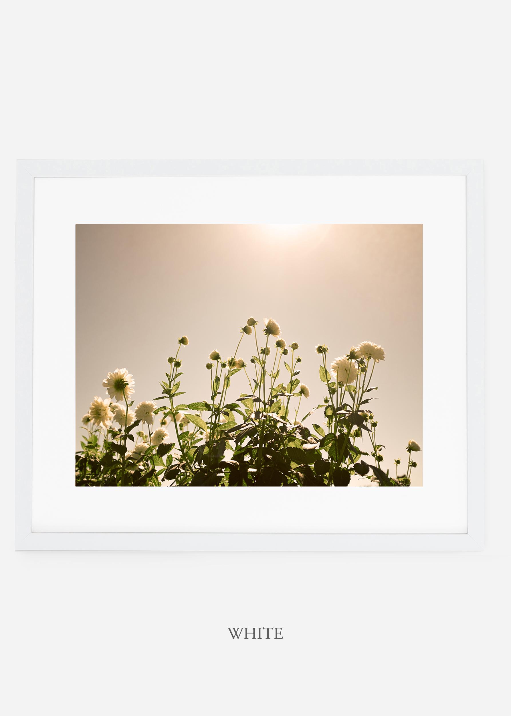 wilder-california-whiteframe-dahlia-7-minimal-botanical-print-art-interior-design.jpg