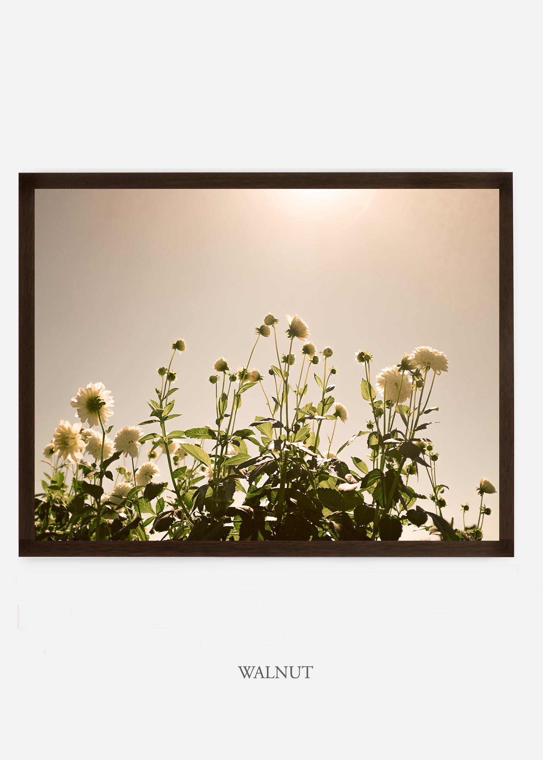 NoMat-DarkWalnutFrame-DahliaNo.7-Wilder-California-Art-Floral-Home-decor-Prints-Dahlia-Botanical-Artwork-Interior-design.jpg