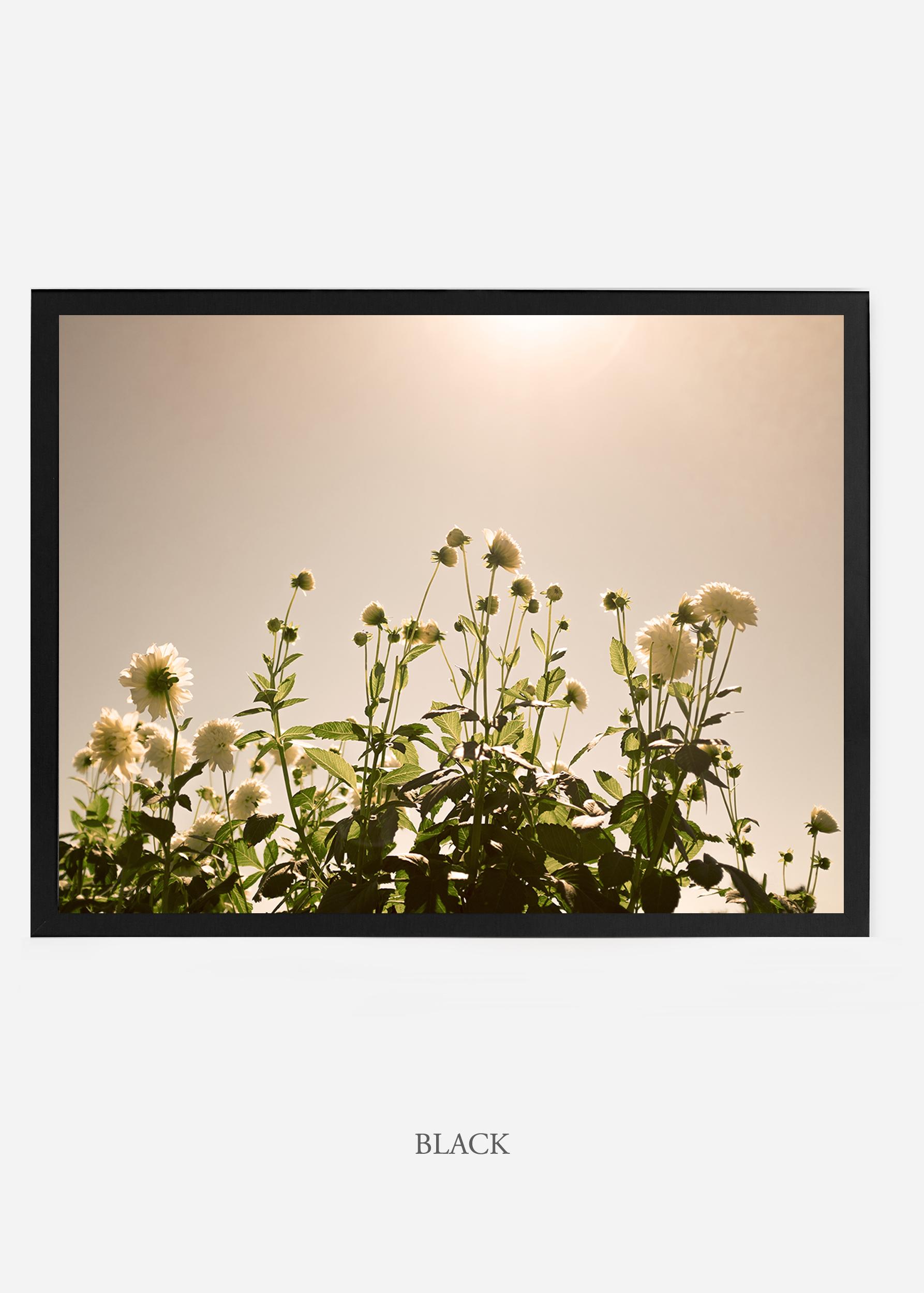 NoMat-BlackFrame-DahliaNo.7a-Wilder-California-Art-Floral-Home-decor-Prints-Dahlia-Botanical-Artwork-Interior-design.jpg