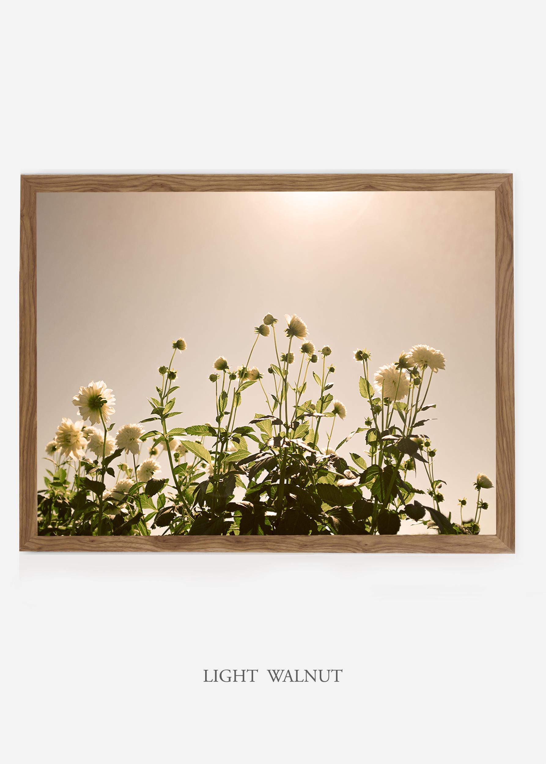 NoMat-LightWalnutFrame-DahliaNo.7-Wilder-California-Art-Floral-Home-decor-Prints-Dahlia-Botanical-Artwork-Interior-design.jpg