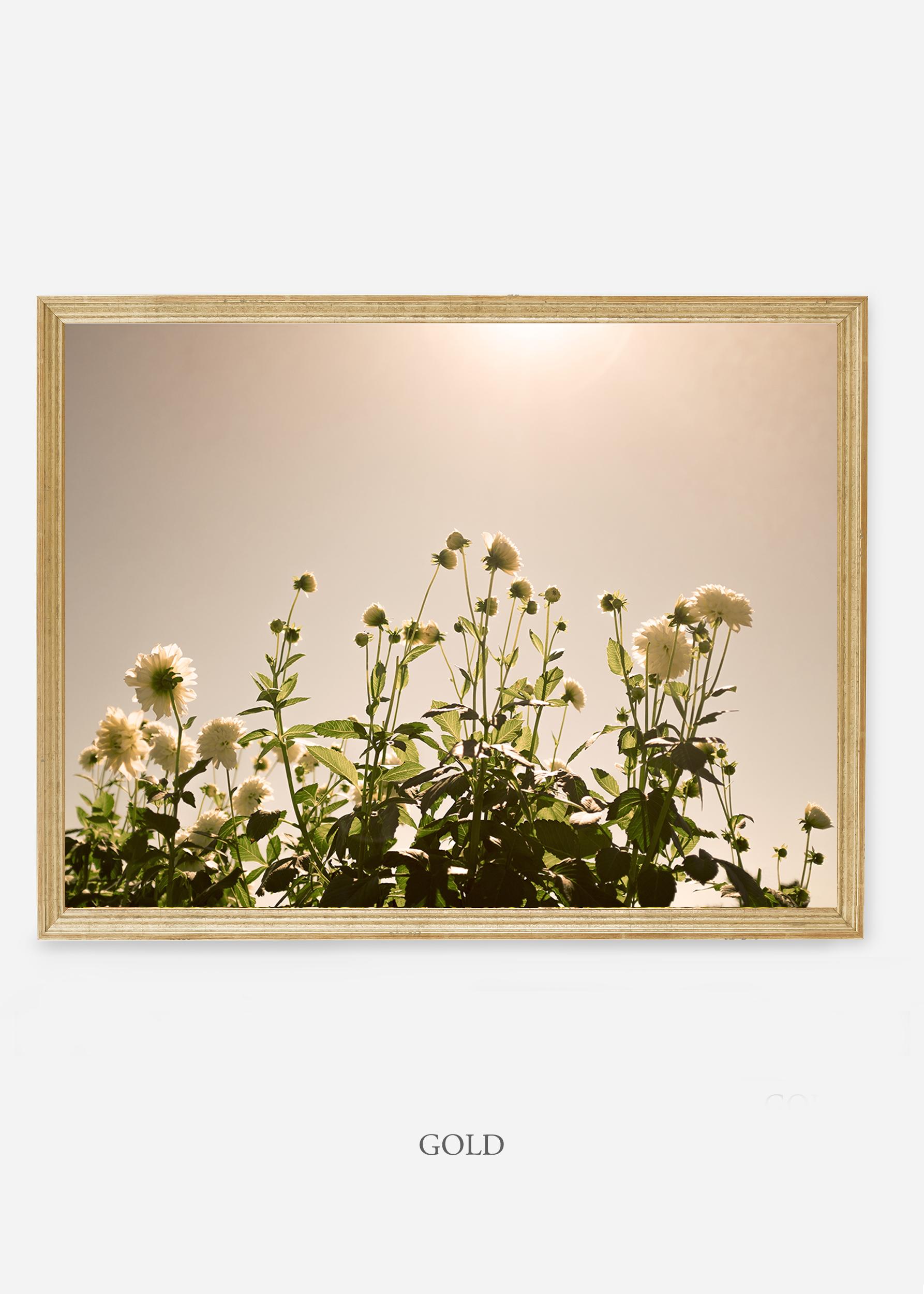 NoMat-Gold-Frame-DahliaNo.7-Wilder-California-Art-Floral-Home-decor-Prints-Dahlia-Botanical-Artwork-Interior-design.jpg