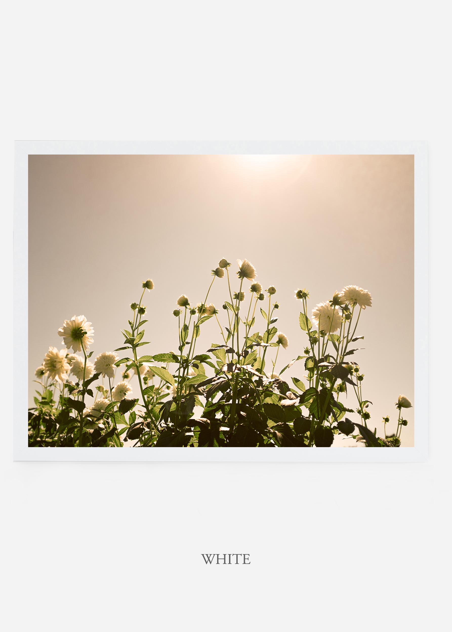 NoMat-WhiteFrame-DahliaNo.7-Wilder-California-Art-Floral-Home-decor-Prints-Dahlia-Botanical-Artwork-Interior-design.jpg