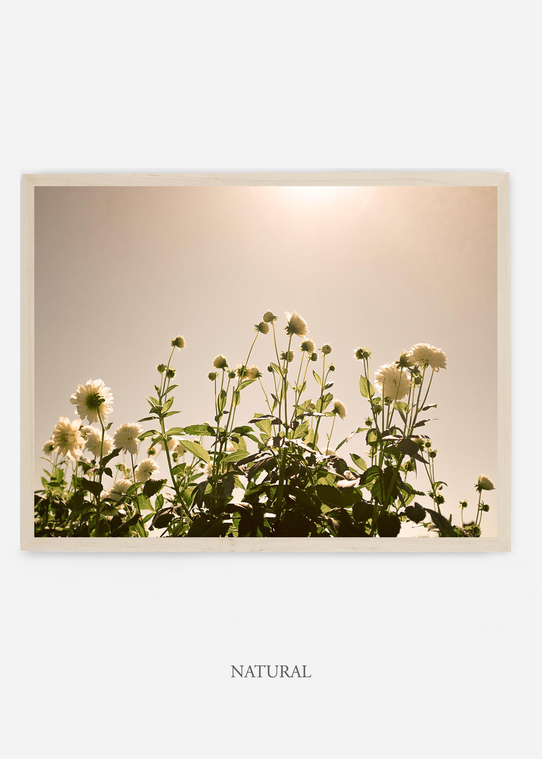 NoMat-Natural-Frame-DahliaNo.7-Wilder-California-Art-Floral-Home-decor-Prints-Dahlia-Botanical-Artwork-Interior-design.jpg